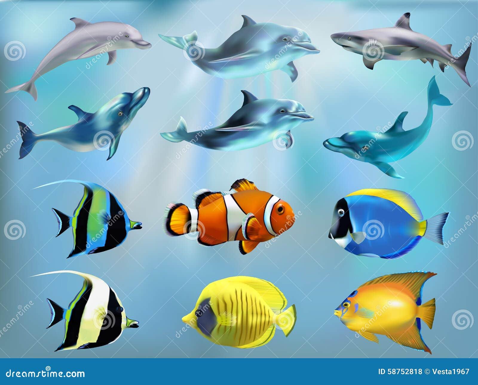 meeresfisch im satz vektor abbildung bild von haifische. Black Bedroom Furniture Sets. Home Design Ideas