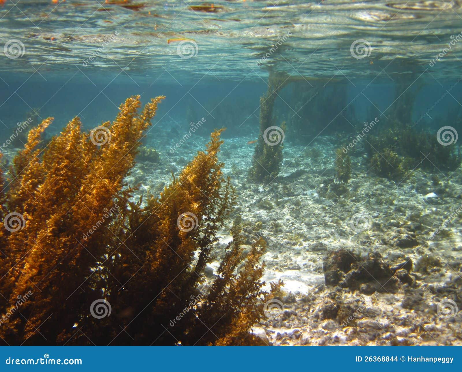 Meerespflanze