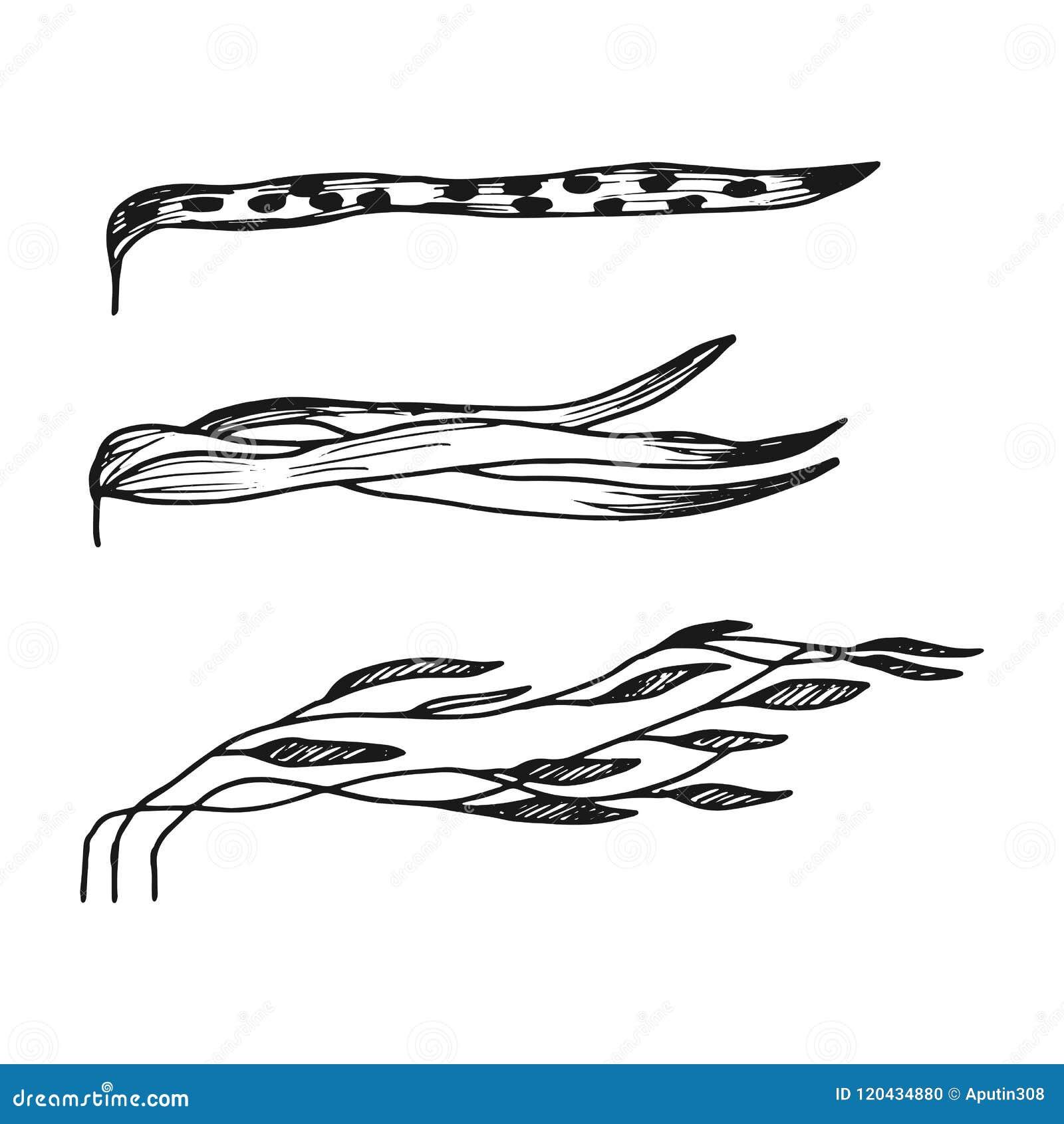 Meerespflanze trägt hinunter den Strom einfacher Skizzenvektor lokalisiert