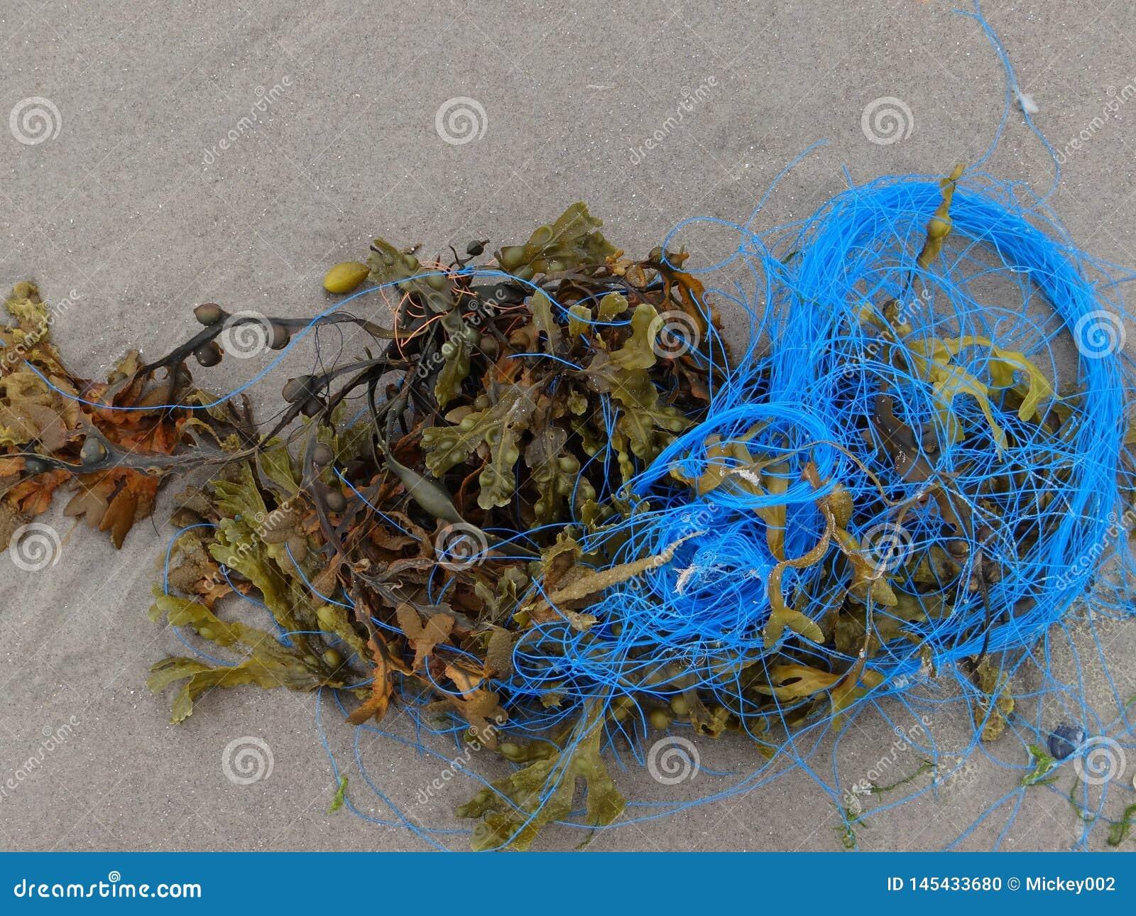 Meerespflanze und blaues Seil