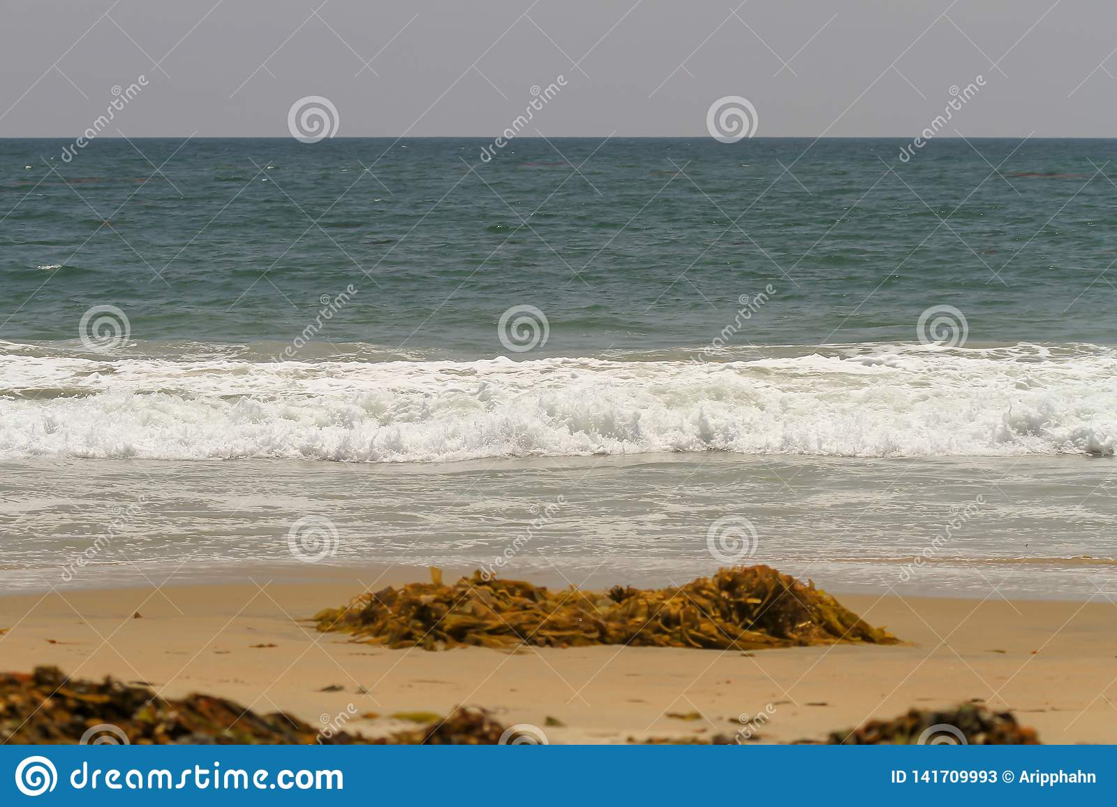 Meerespflanze und Treibgut gewaschen oben auf einem sandigen Strand