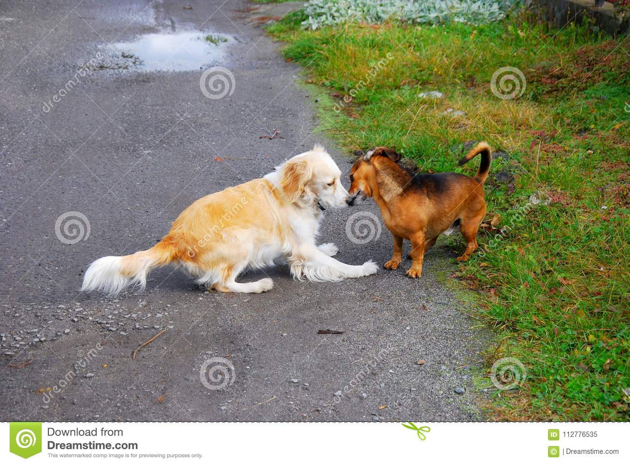 Meeting and acquaintance of two dogs.