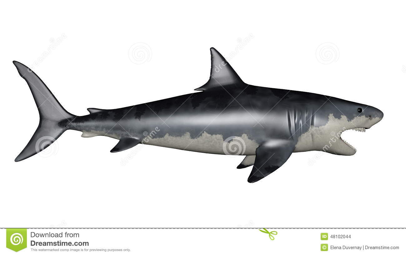 megalodon dinosaur 3d render stock illustration image 48102044