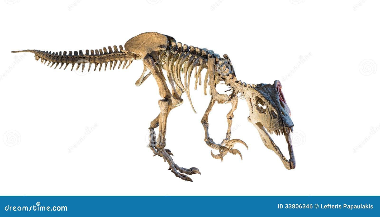 Megaraptor (Megaraptor namunhuaiquii) skeleton isolated