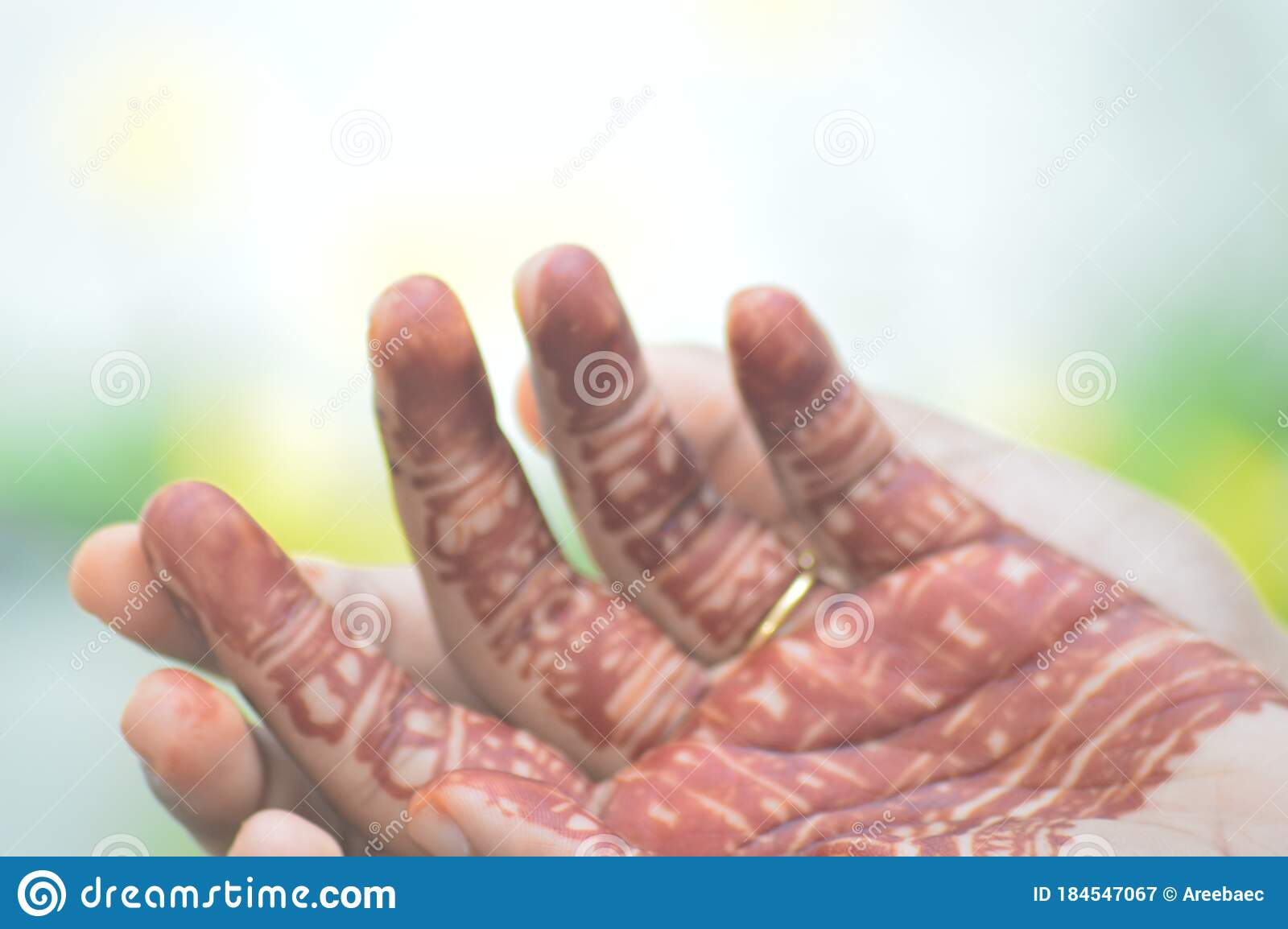 Mehandhi Application Is An Ancient Traditional Art Of India It Is A Body Art It Last For About Two Weeks Stock Image Image Of Organ Skin 184547067