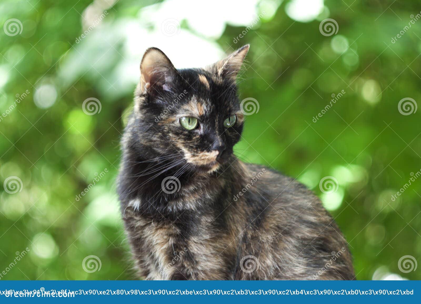 Mehrfarbige Katze auf einem grünen Hintergrund