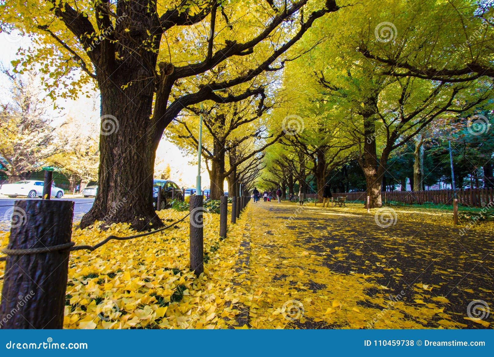 Meiji-jingu Gaien parkerar Ginkgoavenyn för ` s