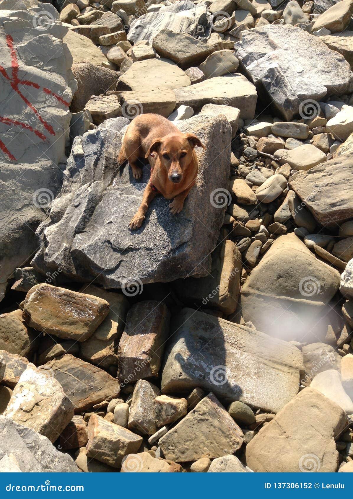 Mein Hund in einem Steinstrand