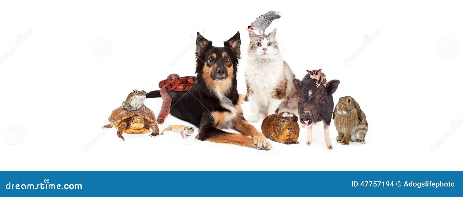 Meios feitos sob medida do Social das FO do animal de estimação grupo doméstico