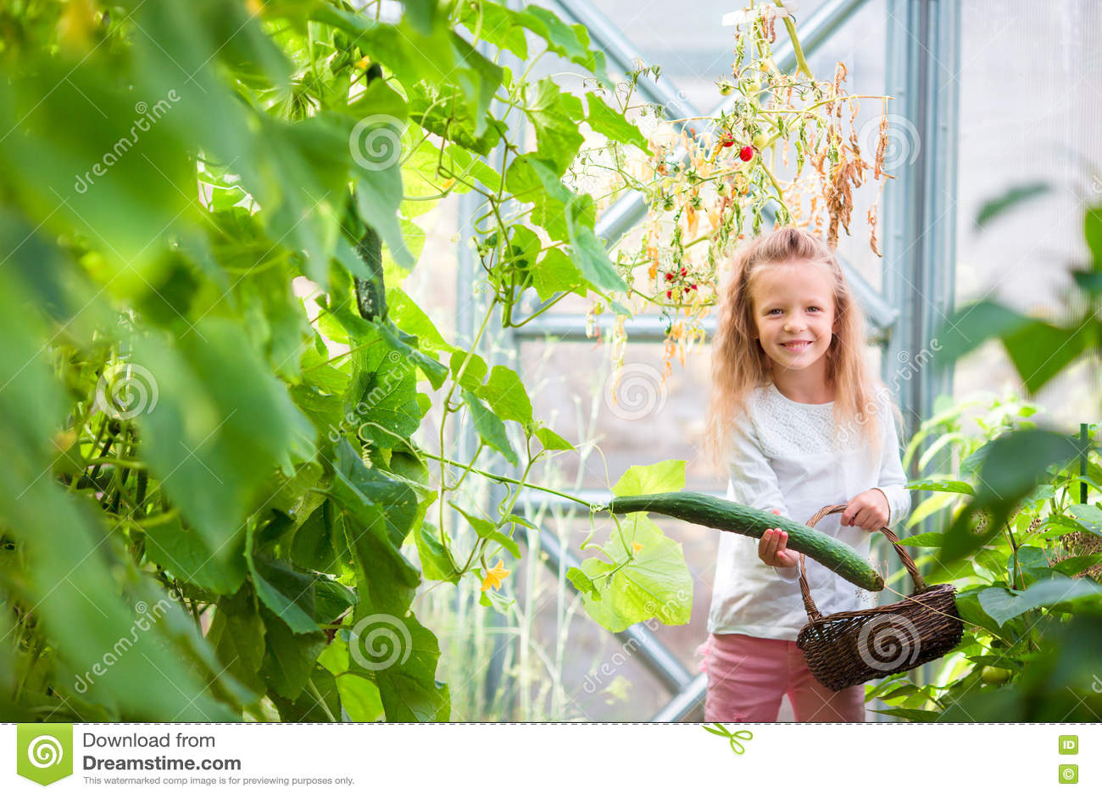 Meisje die gewassenkomkommers en tomaten in serre verzamelen