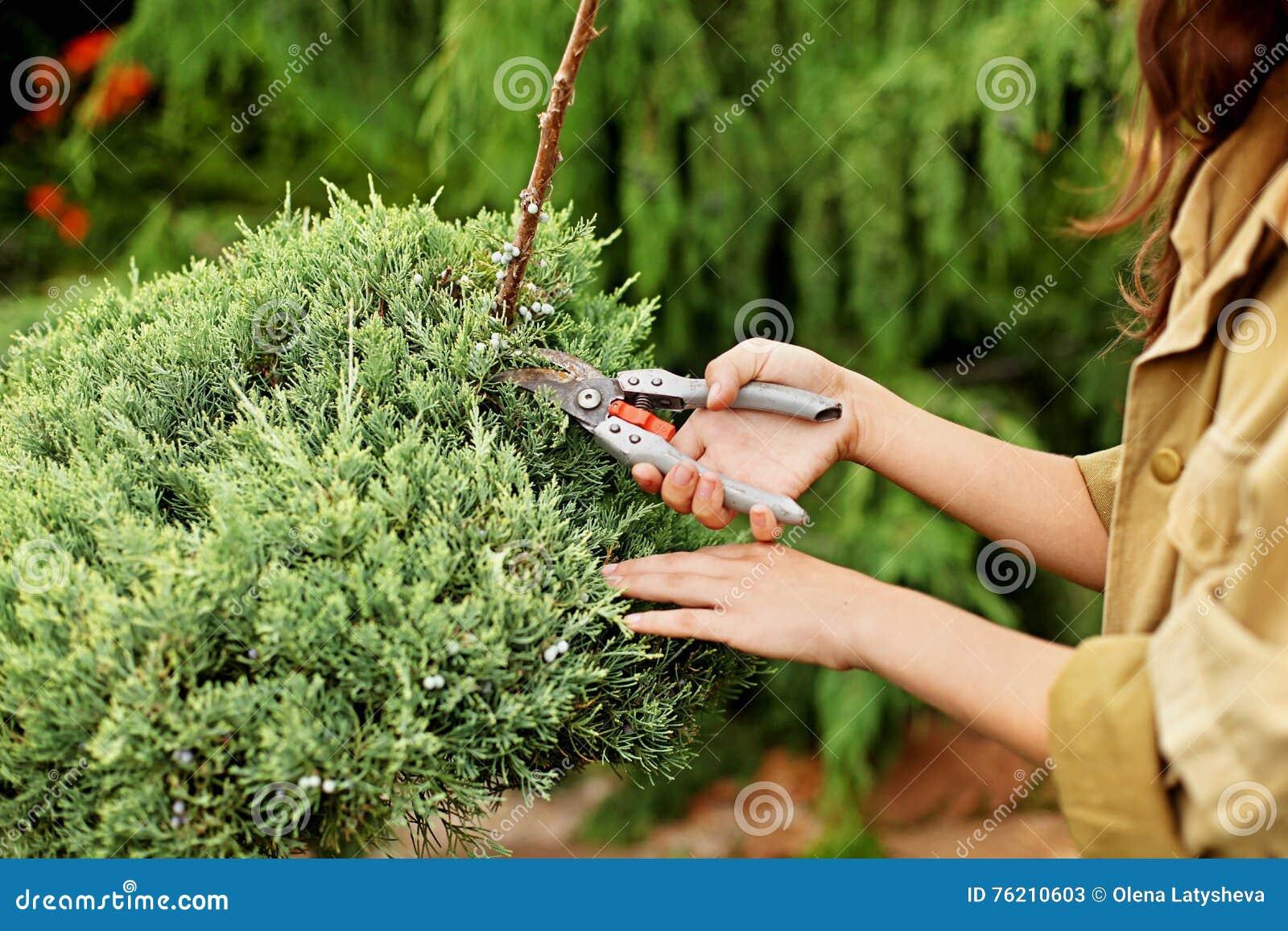 Meisjestuinman in werkkledij en de besnoeiingen altijdgroene tuinschaar van de strohoed