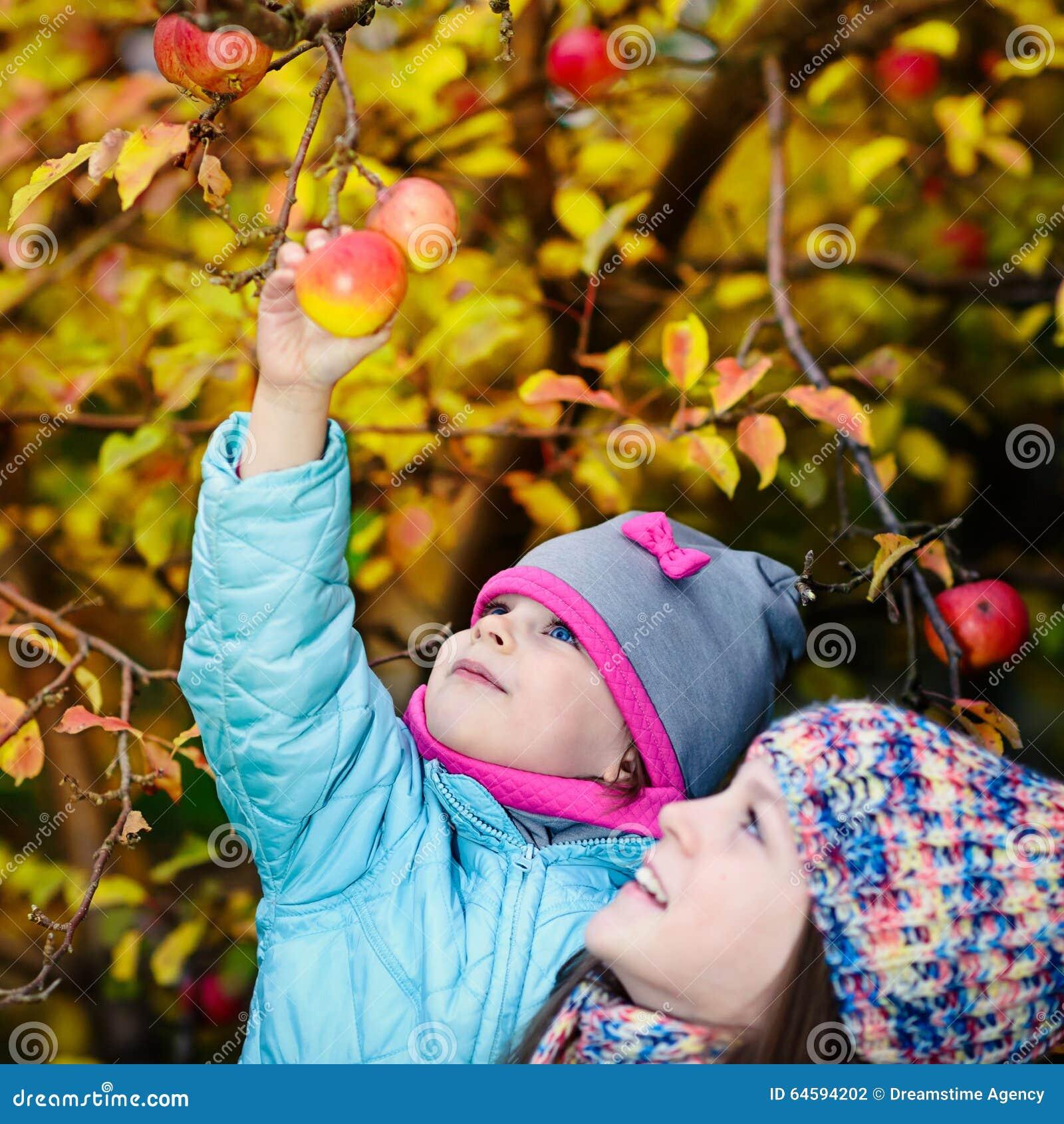 Mela di raccolto della ragazza di autunno dall albero