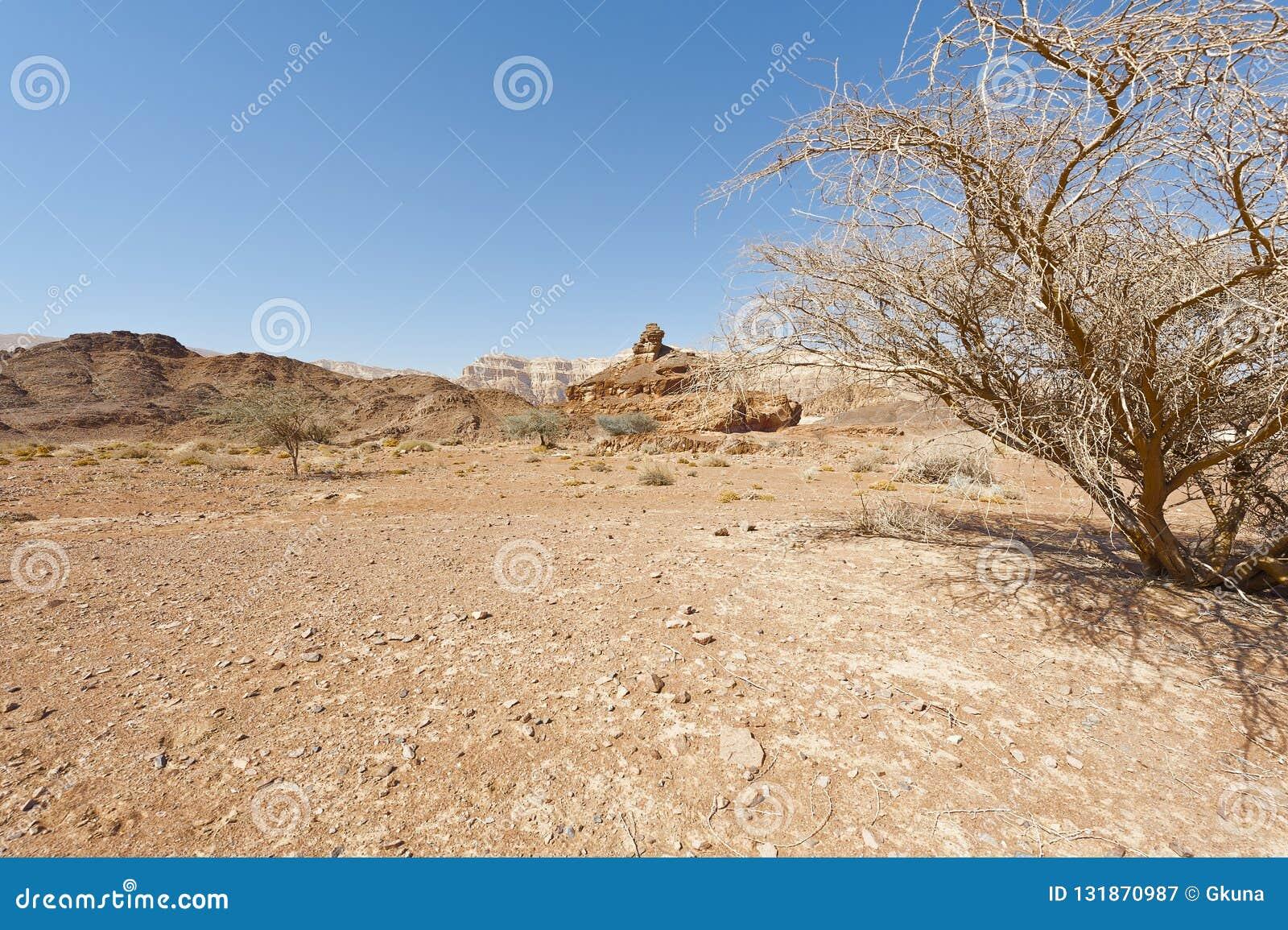Melancholia i czczość pustynia w Izrael