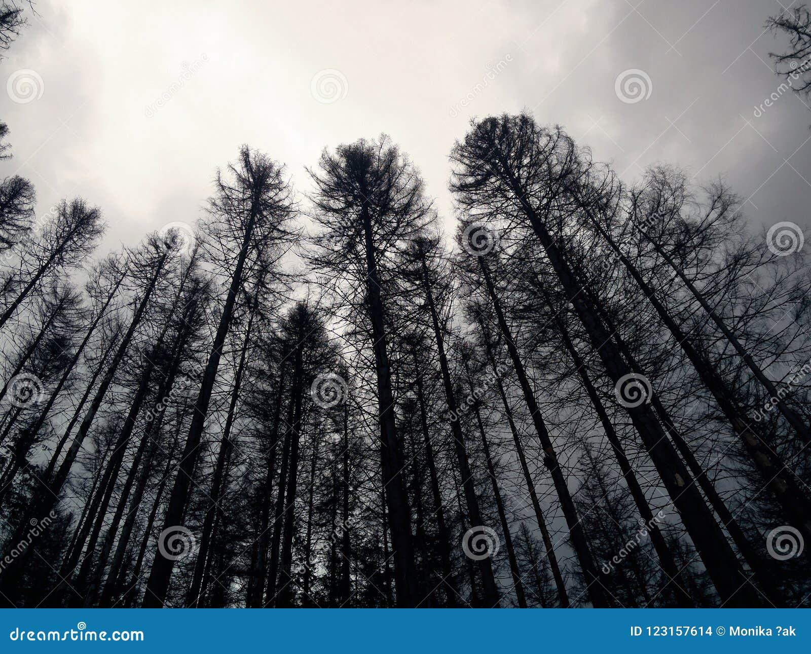 Melancholisch, koud, uitgestorven bos