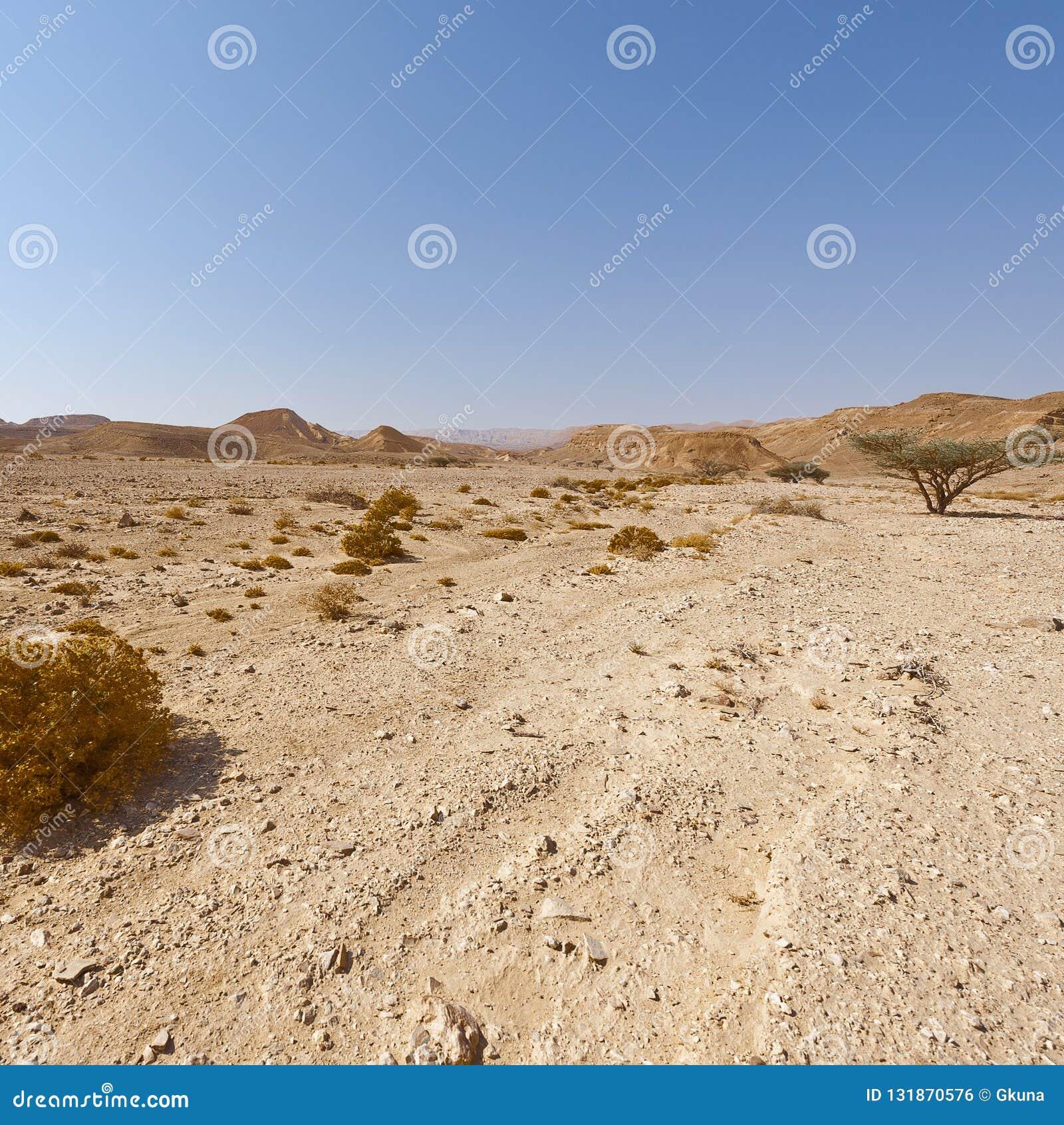 Melankoliskt och tomhet av öknen i Israel
