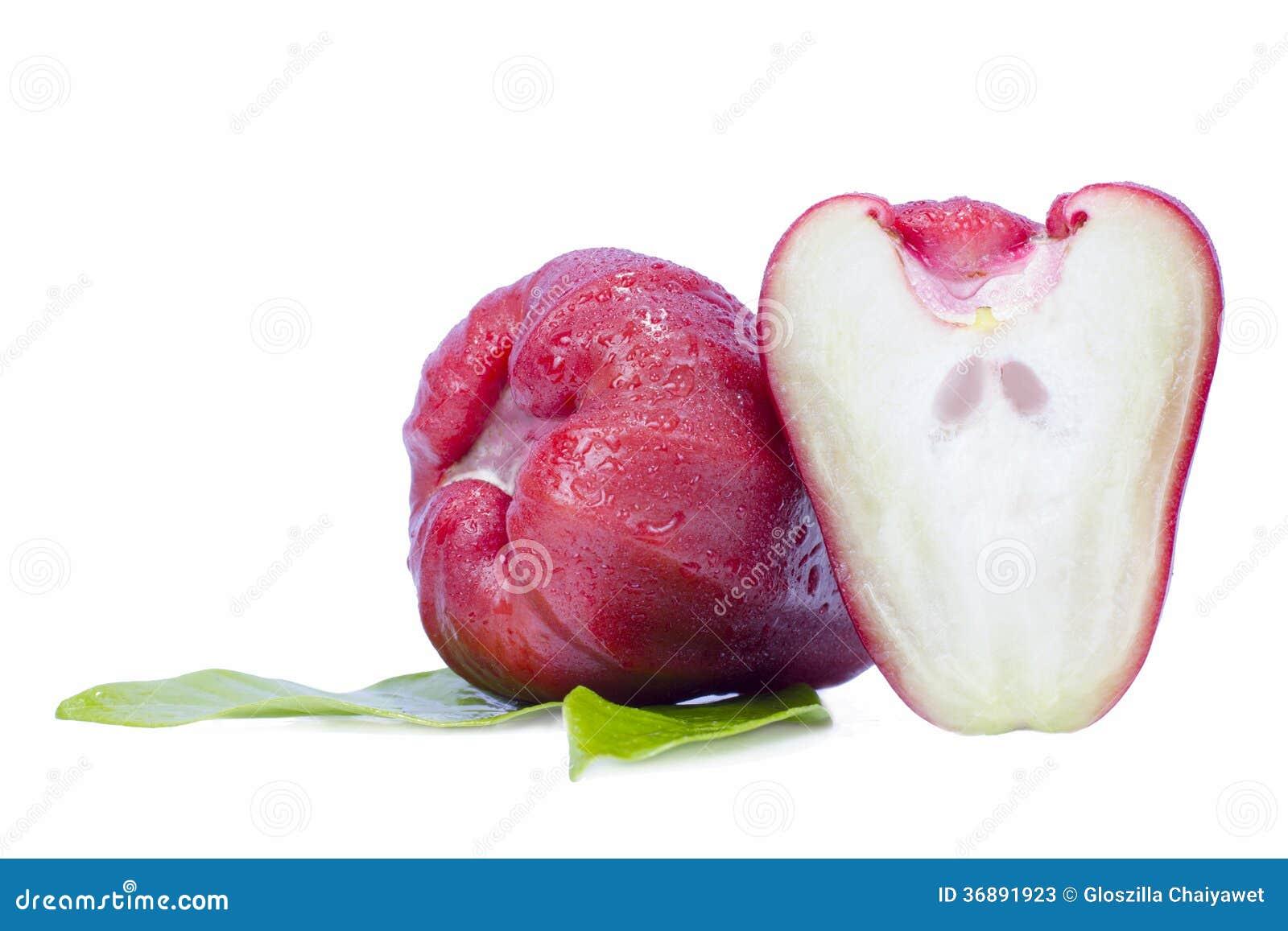 Download Melarose O Chomphu Isolato Su Fondo Bianco Immagine Stock - Immagine di background, organico: 36891923