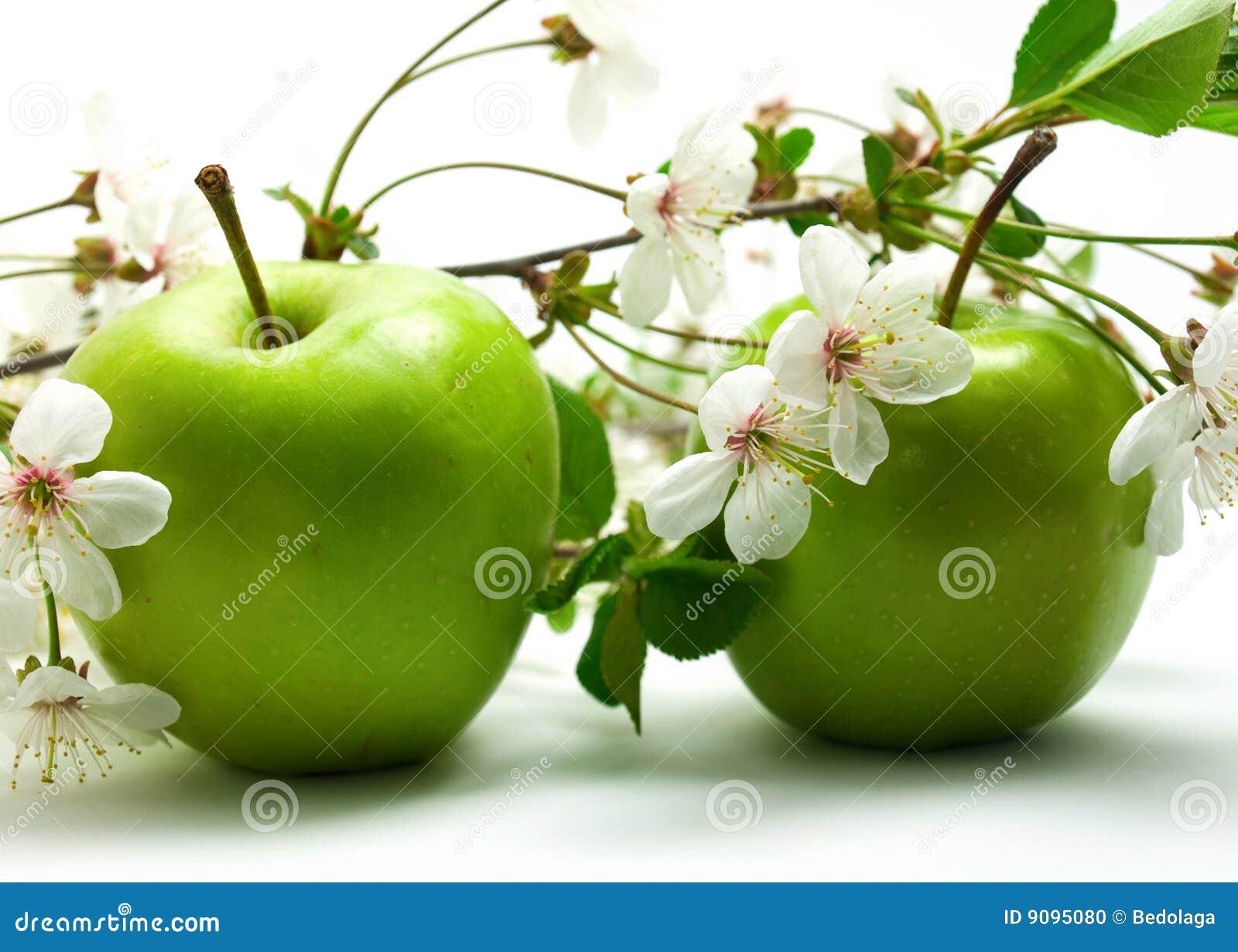 Mele e fiori verdi fotografia stock immagine 9095080 for Fiori verdi