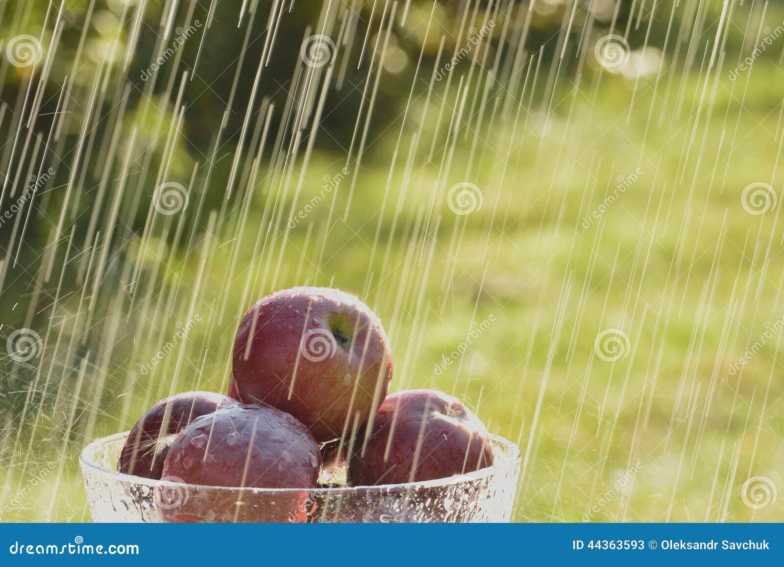 Mele e pioggia di estate