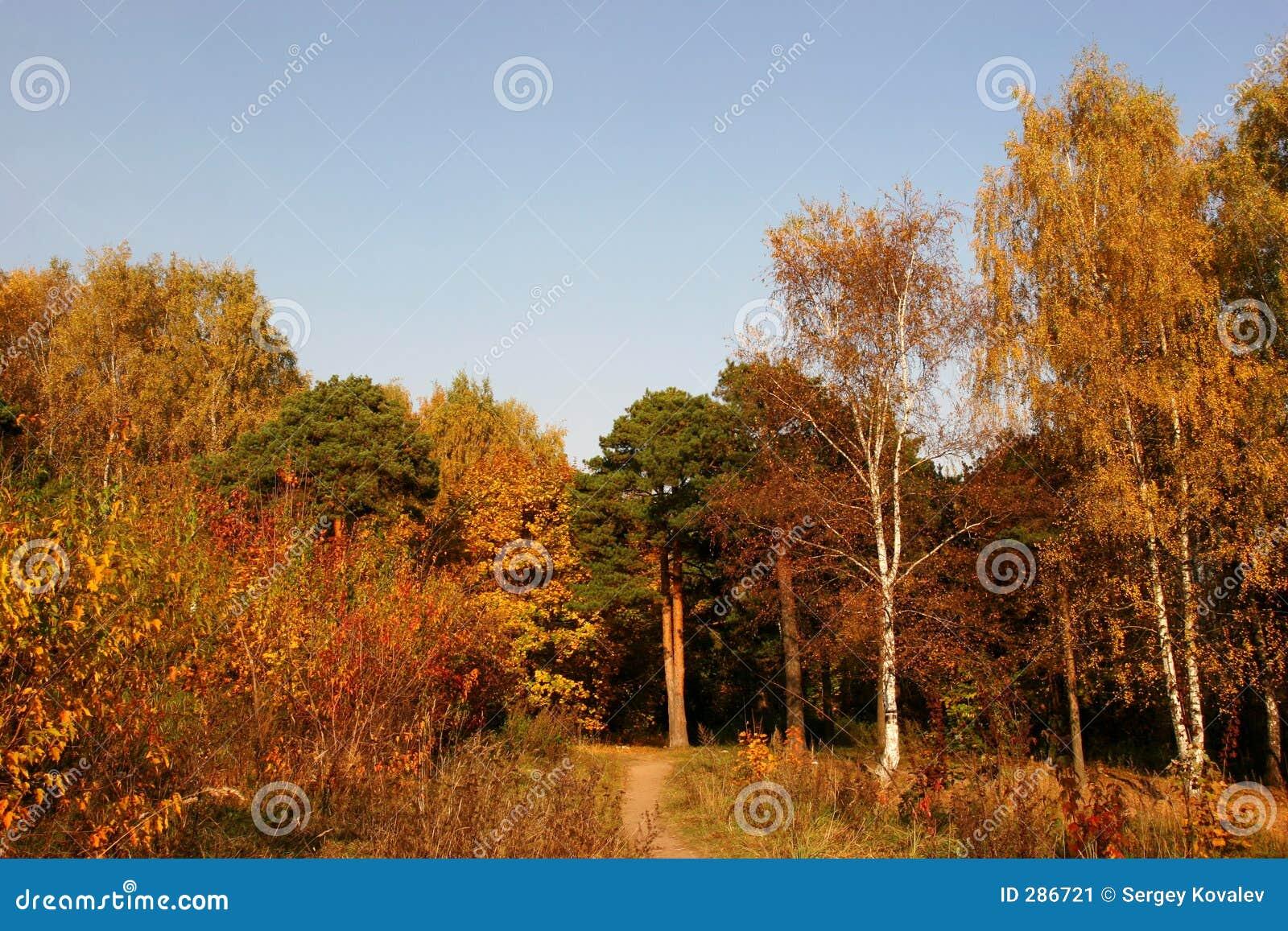 Mellow herfst