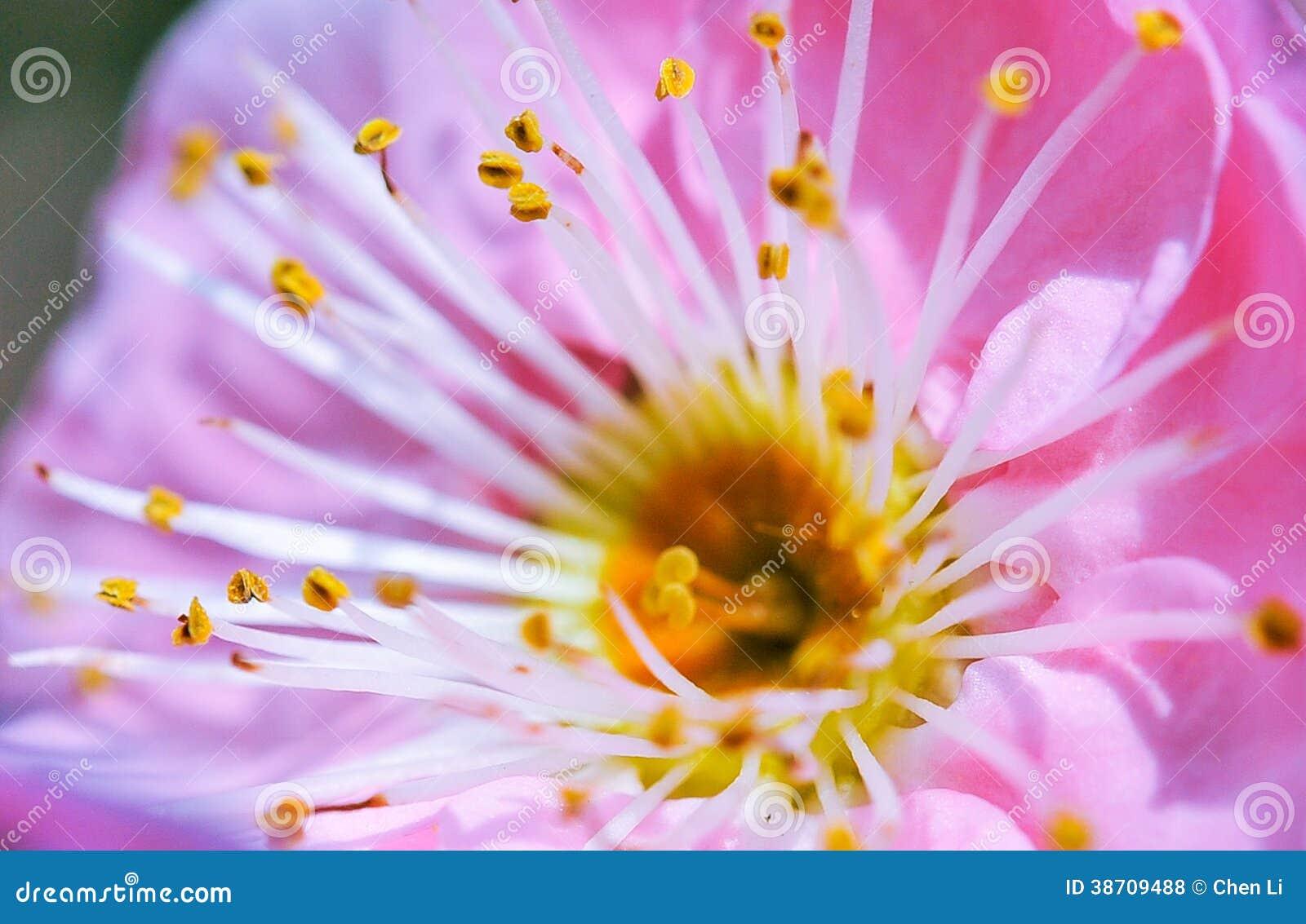 Melocotón y abejas
