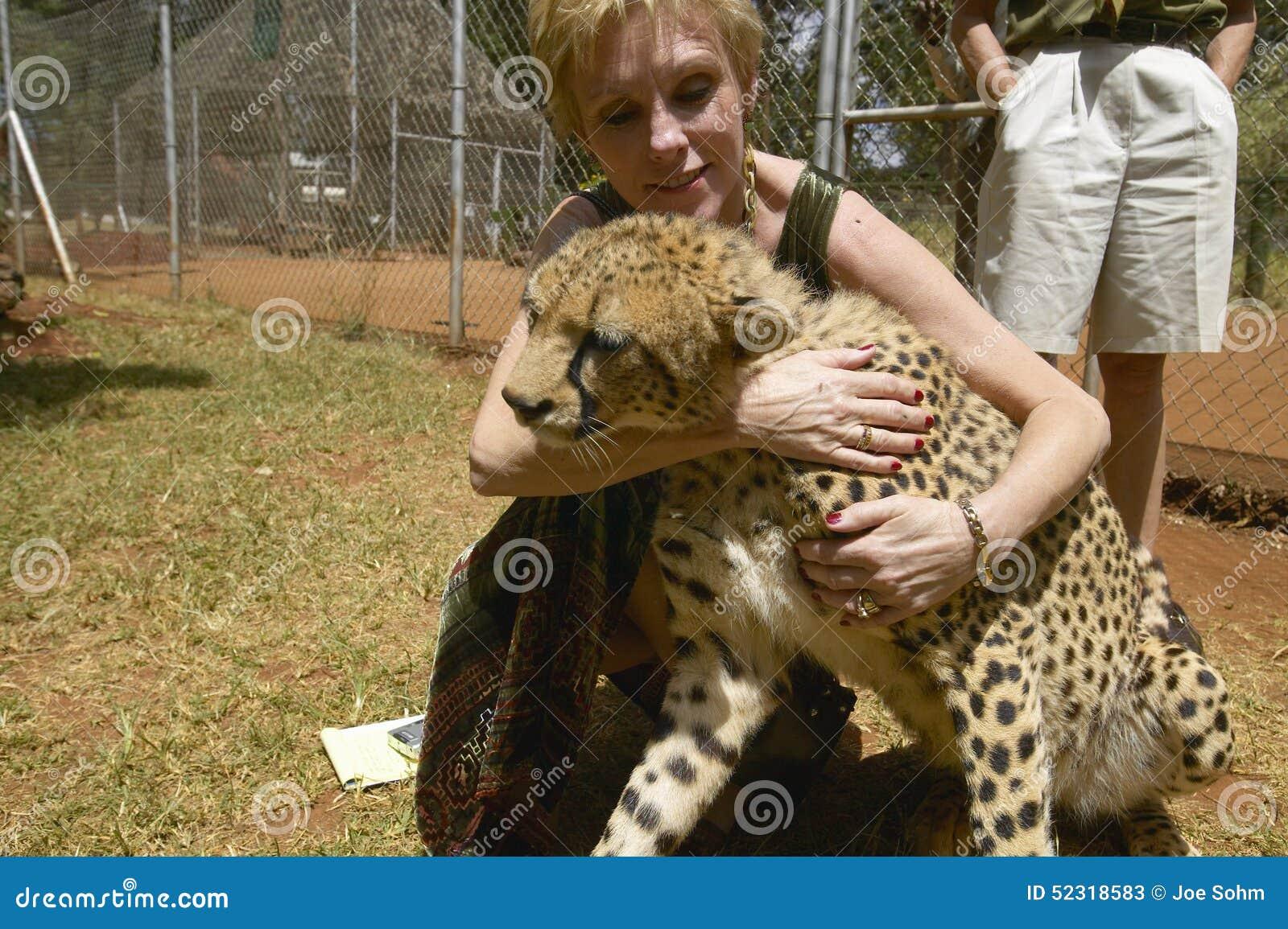 Melodia Taft Humanitarny społeczeństwo USA odwiedza geparda w zwierzęcej łatwości Nairobia, Kenja, Afryka przy KWS Kenja przyrody