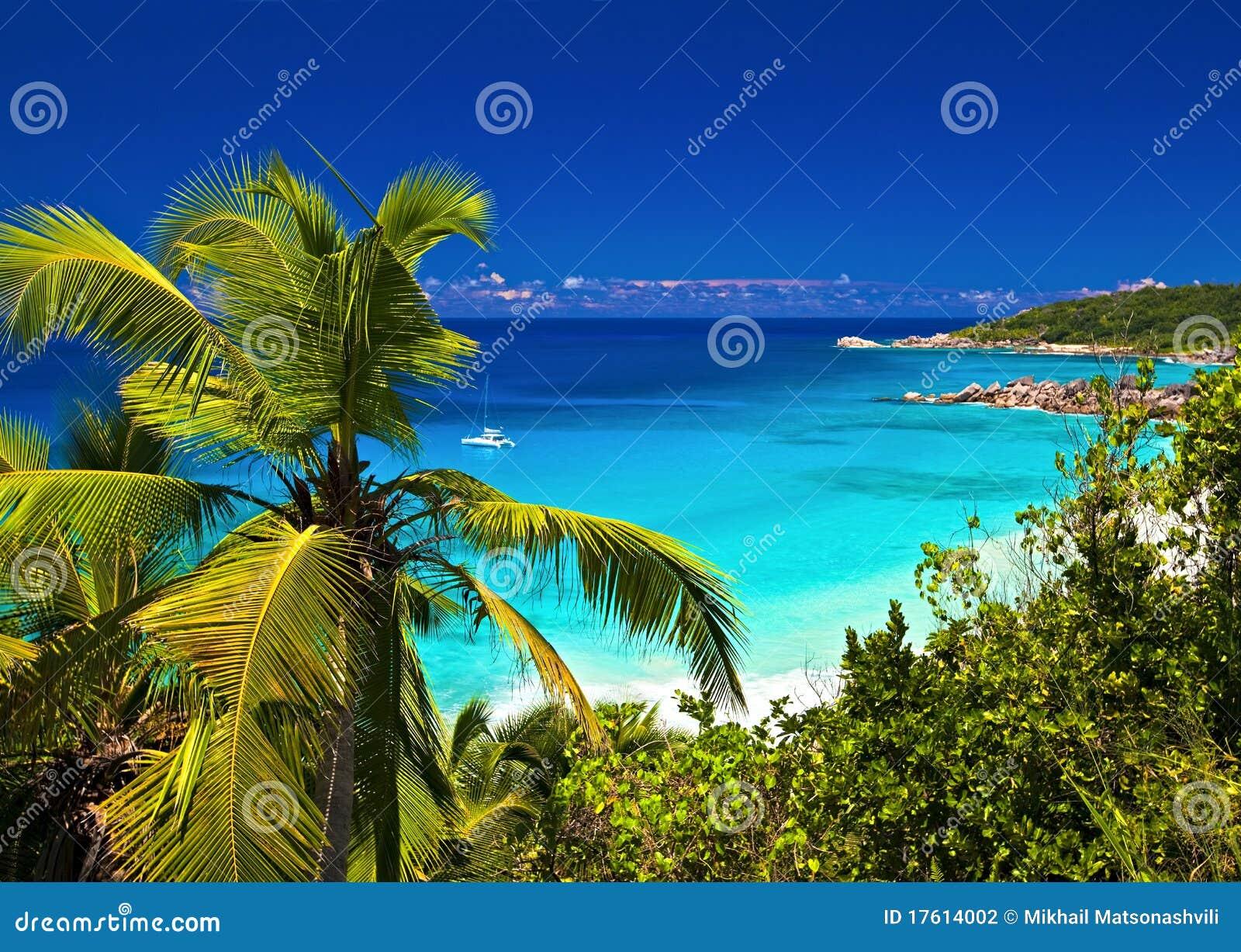 Melodia tropikalna