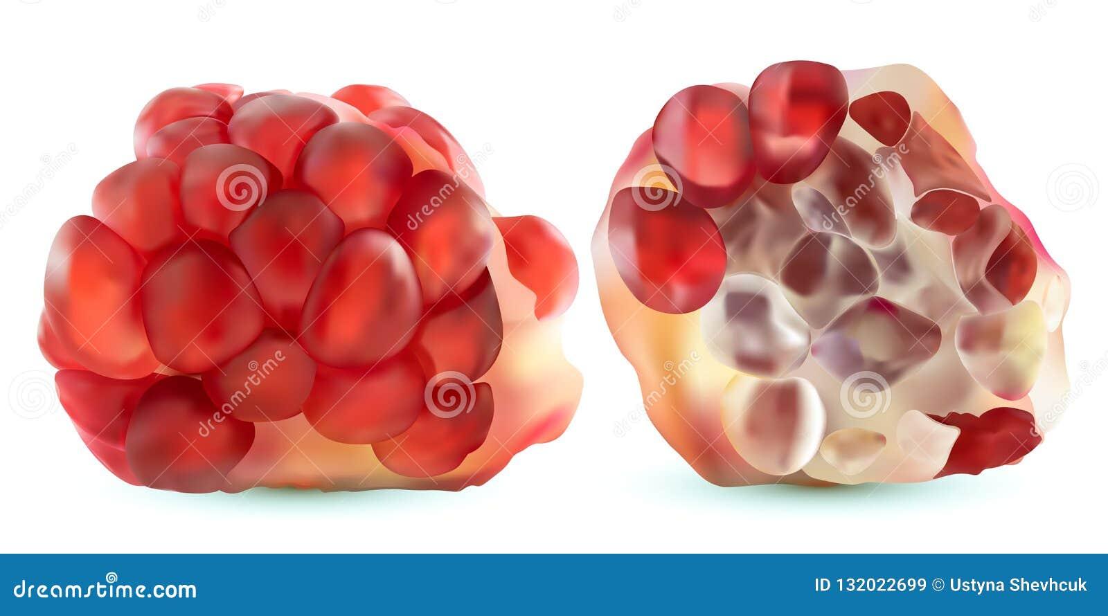 Melograno realistico di vettore 3d, allegagione tropicale, isolata su fondo bianco Melograno maturo rassodato Rubino rosso