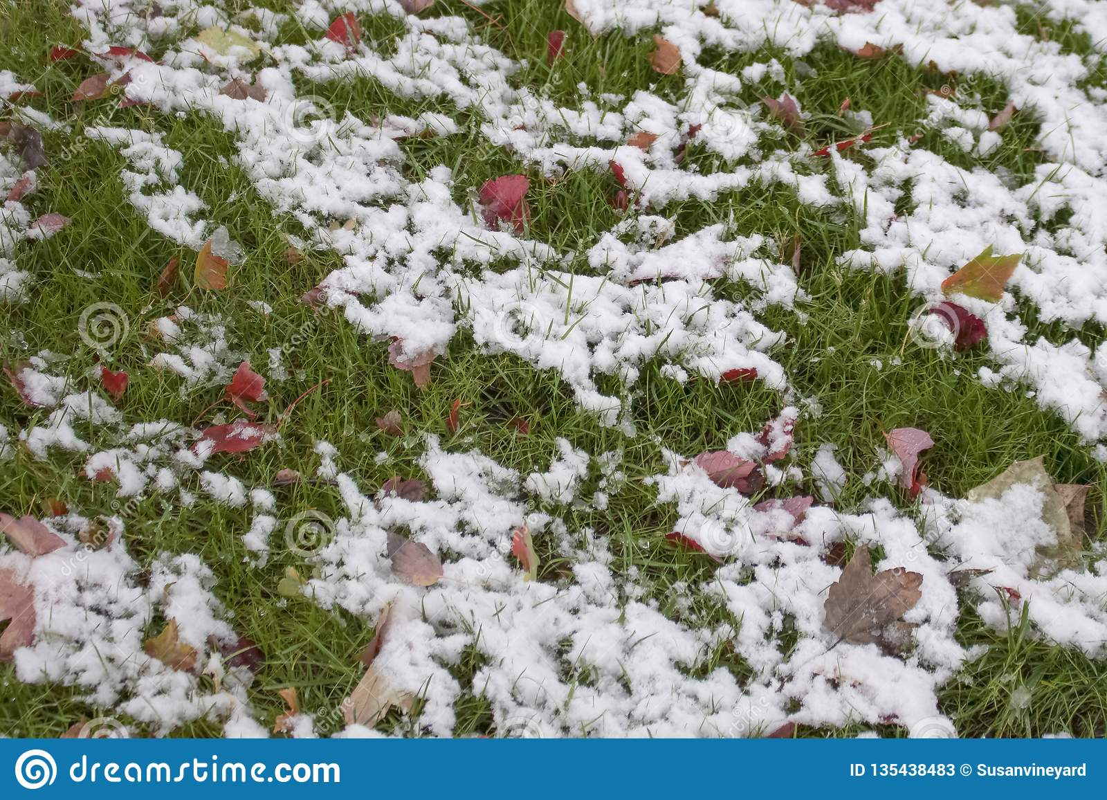 Melting snow on green grass and brightly colored autumn leaves - background