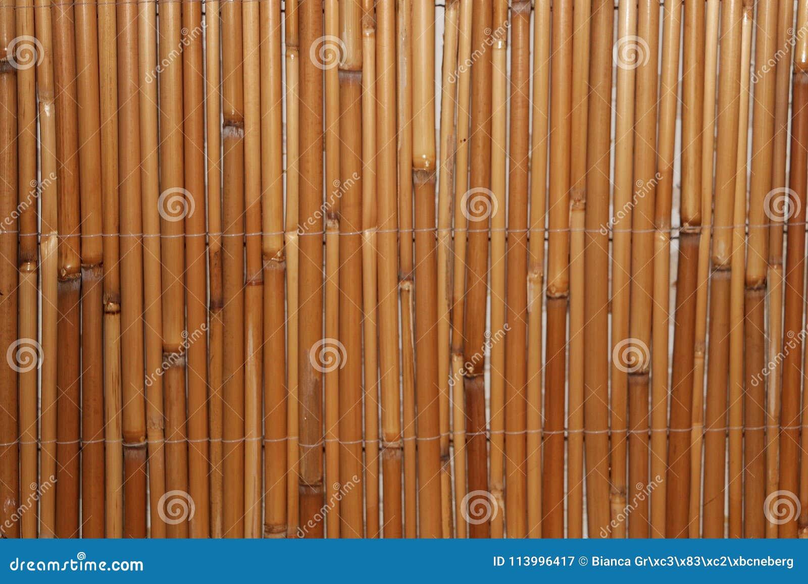 Membros de bambu em seguido