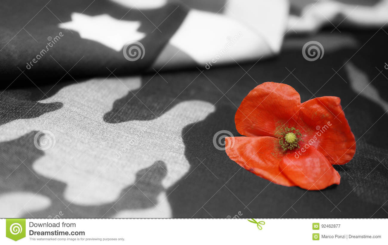 Memorial day poppy flower usa flag stock image image of black memorial day poppy flower on black and white mimetic background usa flag publicscrutiny Gallery