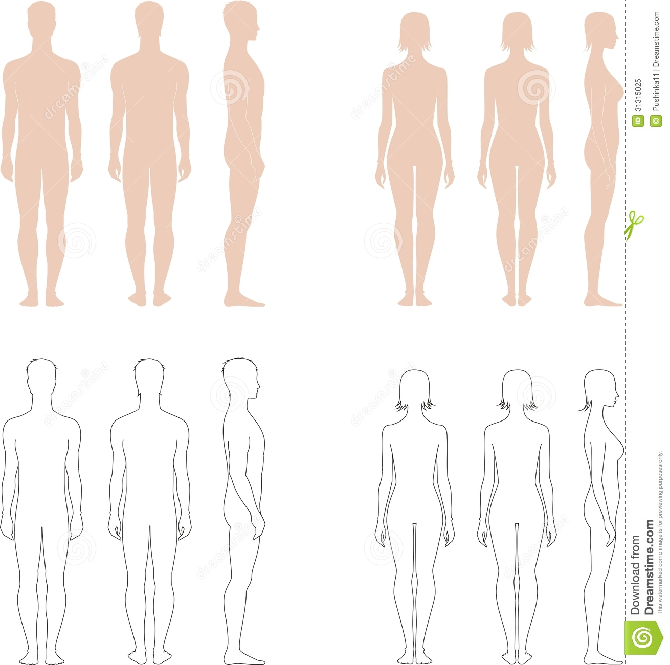 Vector illustration of mens and womens standart figures. Silhouettes.