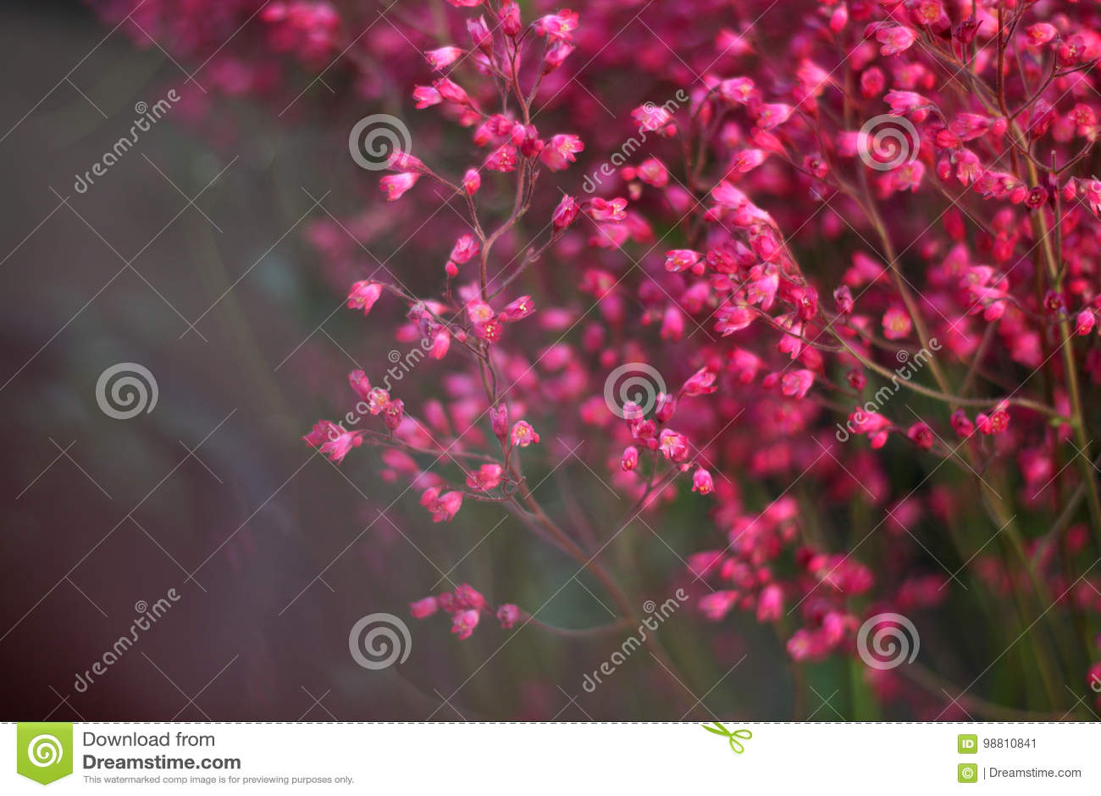 Menchia kwiaty