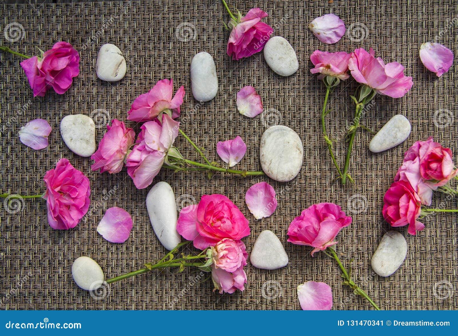 Menchii róża i zdrojów denni kamienie na nieociosanym tle