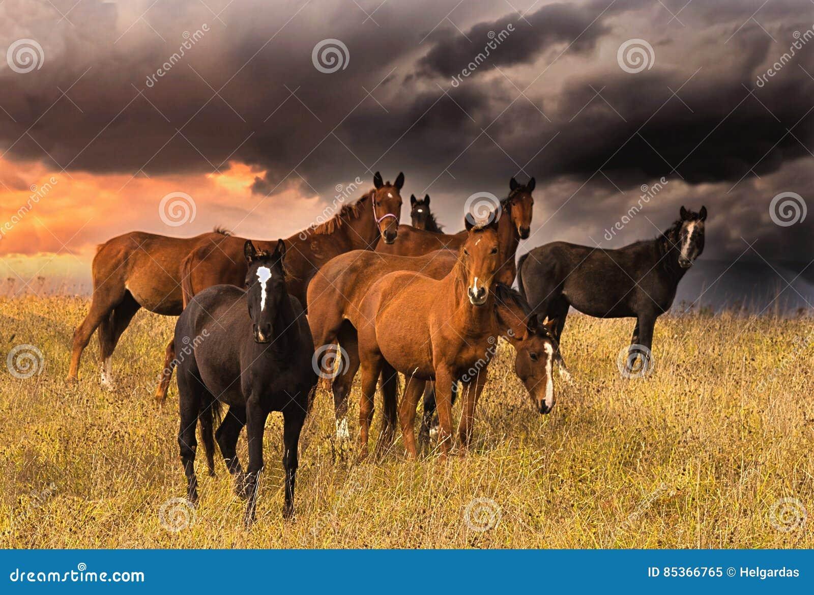 Menge von Pferden