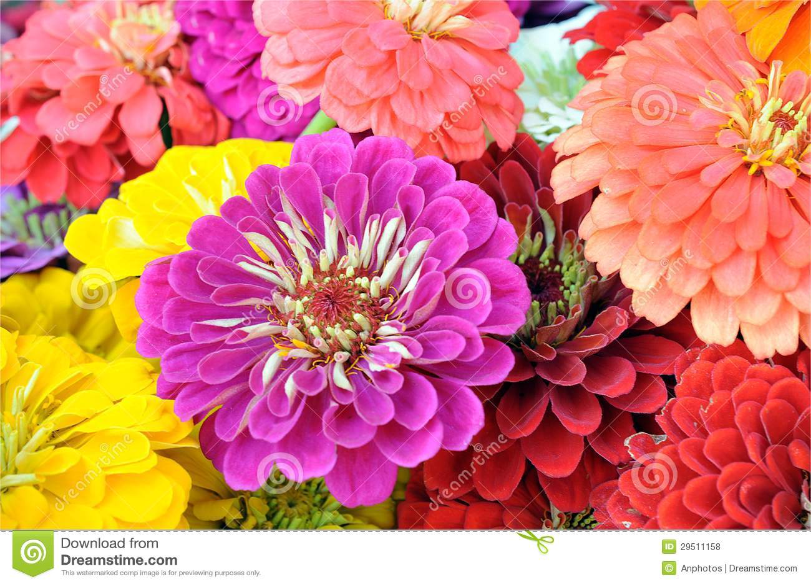 Mengeling van bloem
