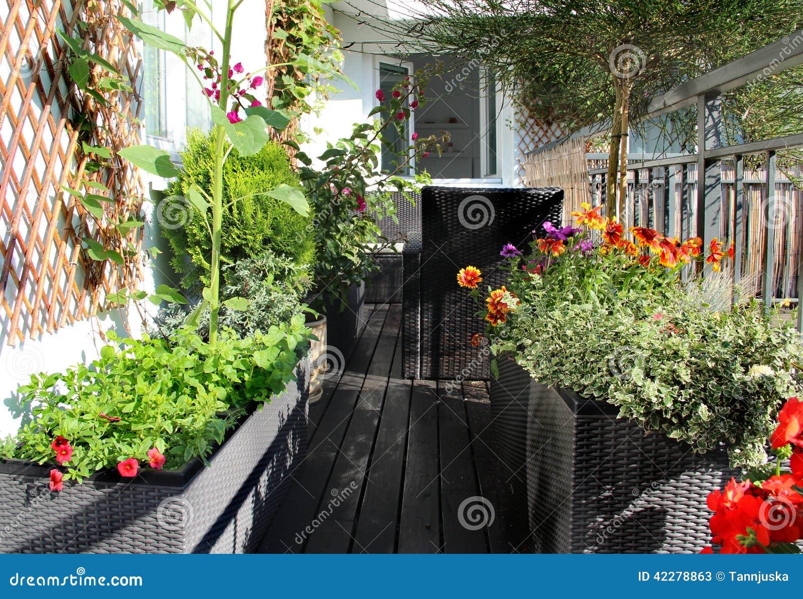 Mengeling van mooie levendige terrasbloemen stock foto afbeelding 42278863 - Foto buitenkant terras ...