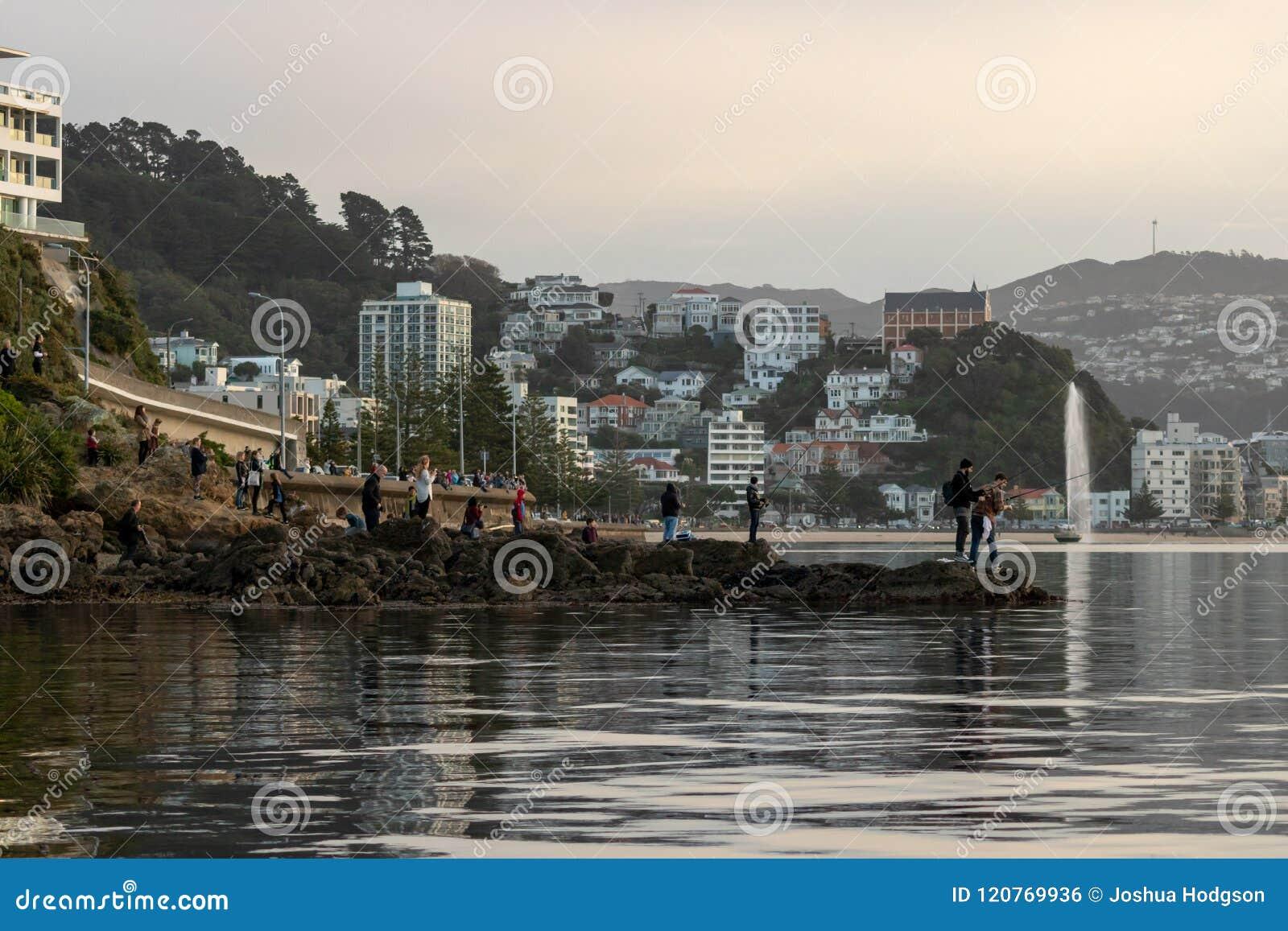 Mengen-Versammlung an der Küstenlinie, zum des Wals, Wellington New Zealand anzusehen
