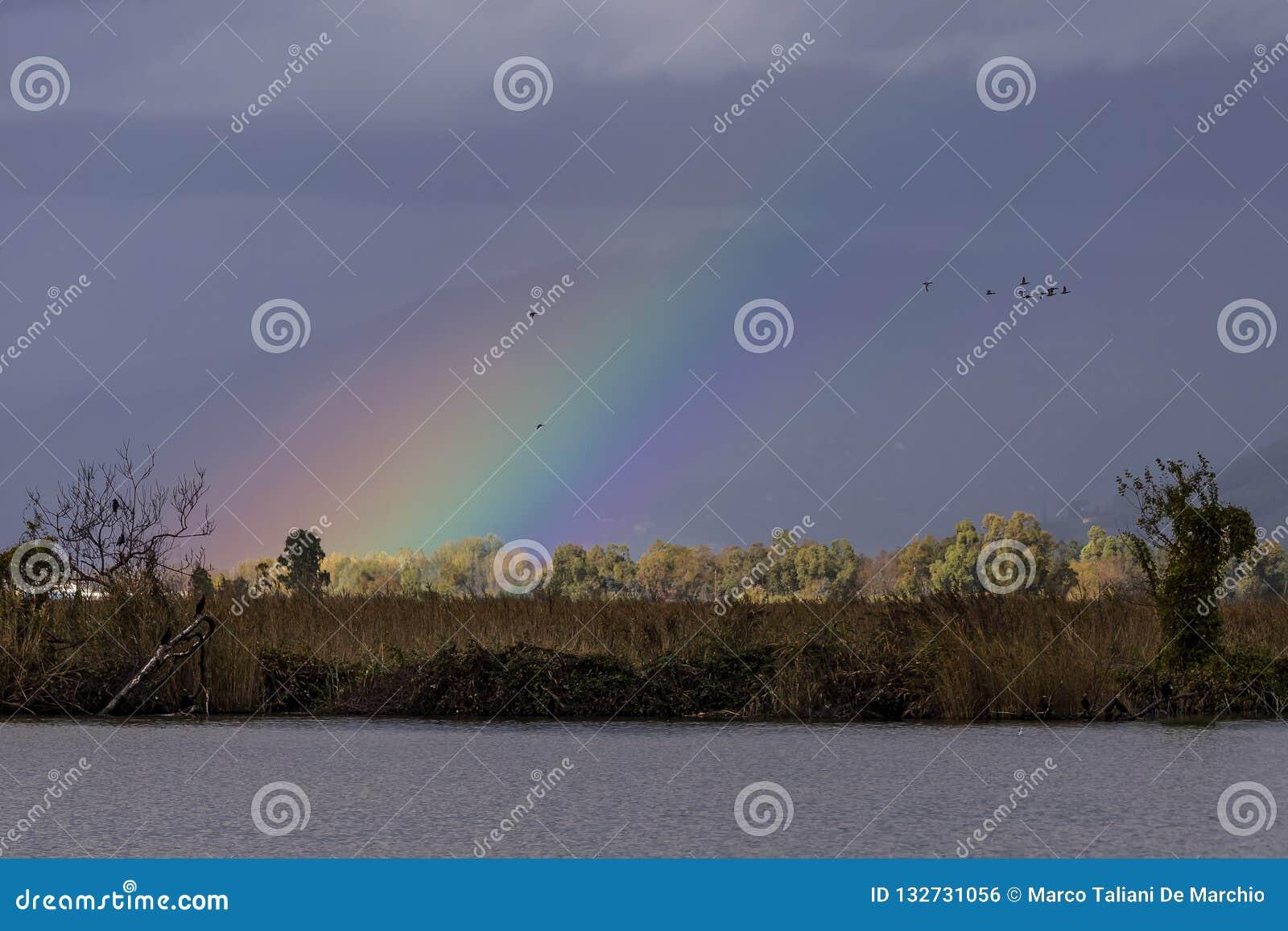 Mengen von Vögeln fliegen in einen Himmel, der durch einen schönen Regenbogen, See Massaciuccoli, Toskana, Italien belichtet wird