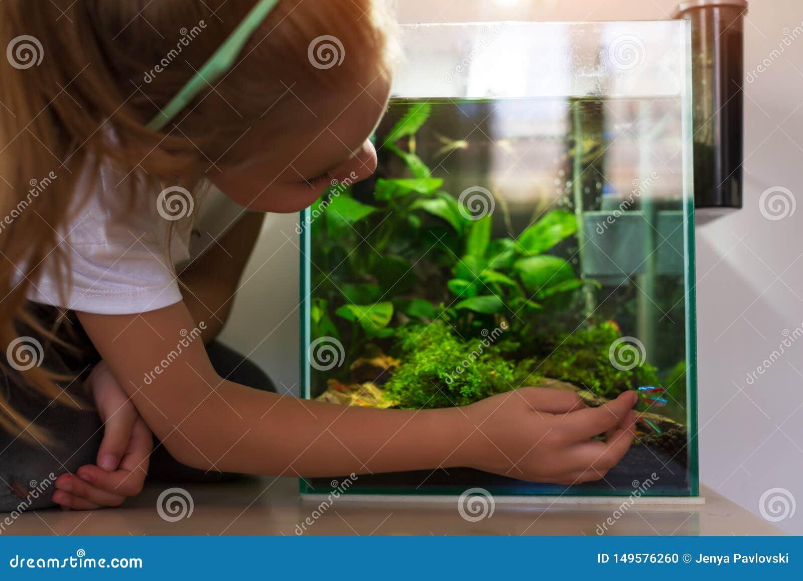 Menina bonito que olha peixes no aqu?rio nano