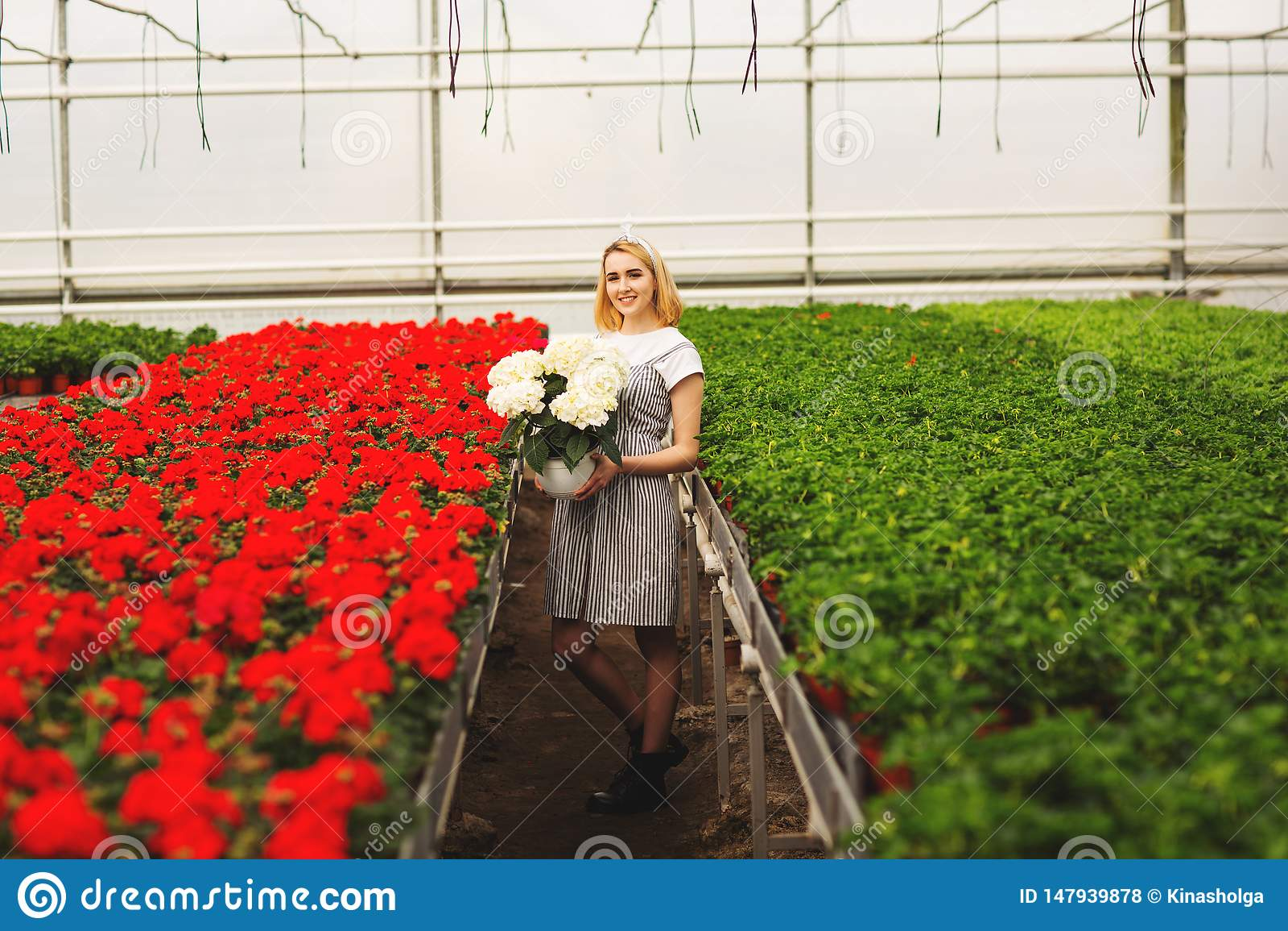 Menina de sorriso nova bonita no vestido, trabalhador com as flores na estufa A menina guarda as flores brancas