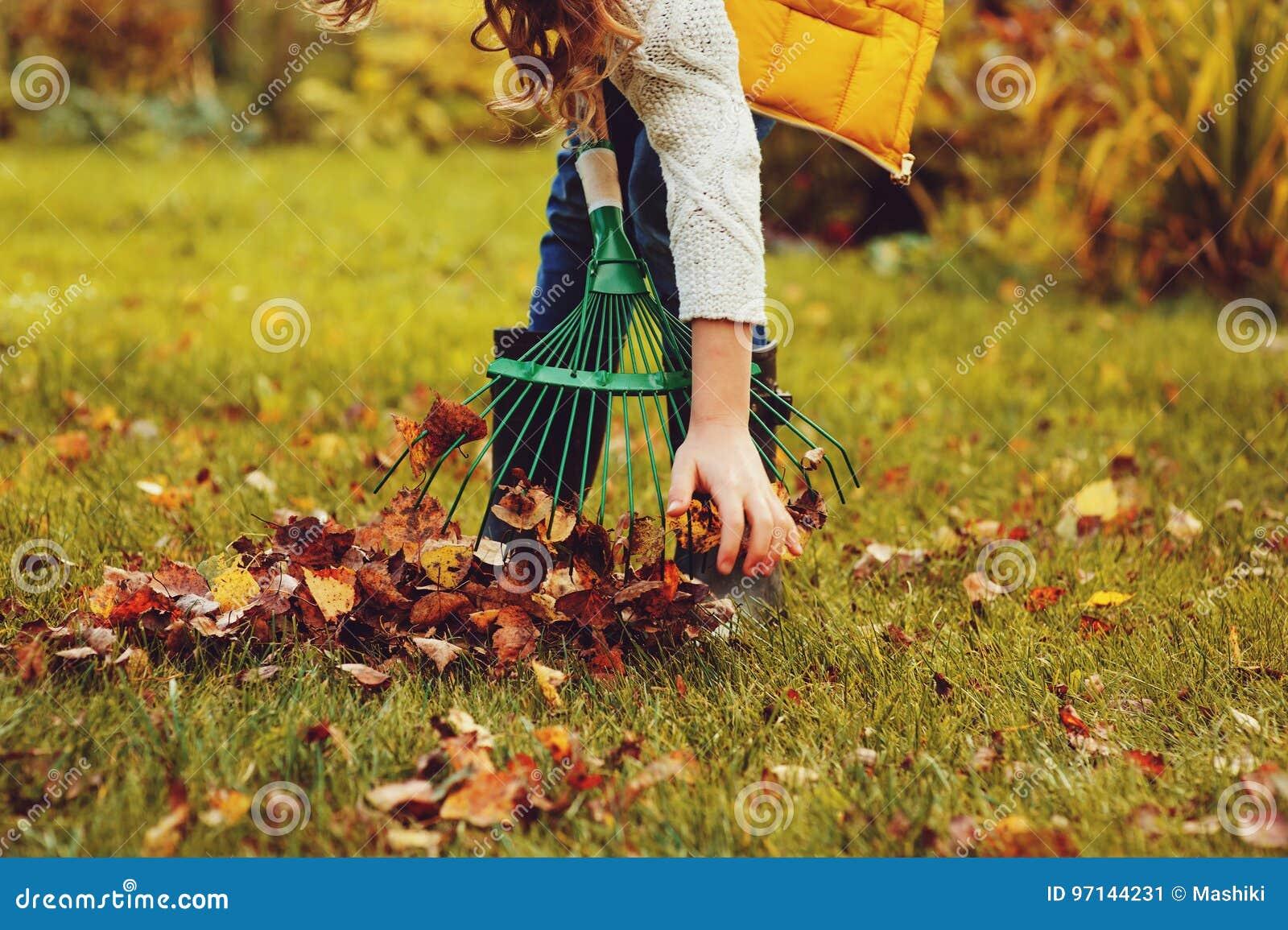 A menina feliz da criança que joga o jardineiro pequeno no outono e que escolhe sae na cesta Trabalho sazonal do jardim