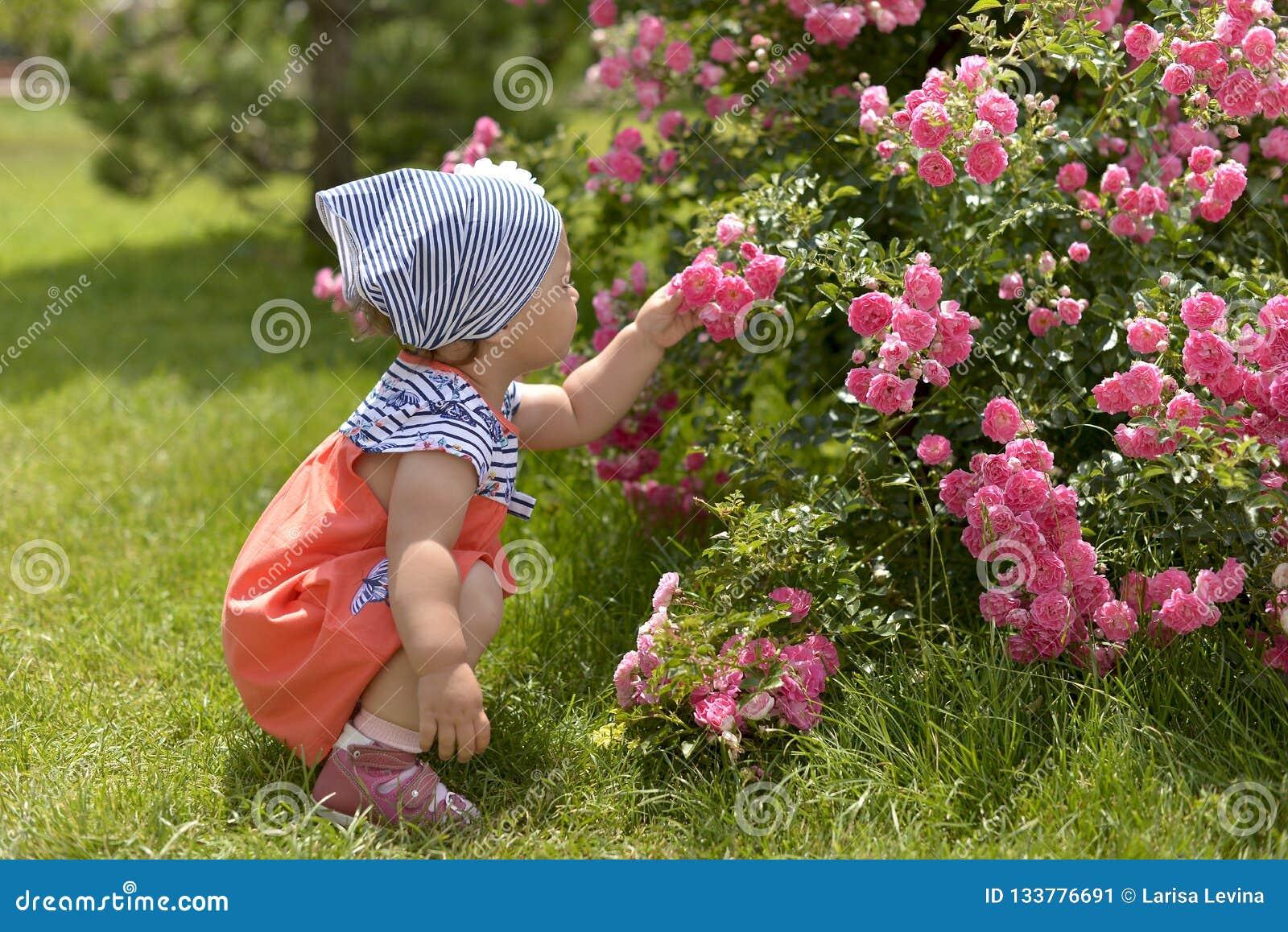 Menina no passeio no jardim, aspirando rosas cor-de-rosa
