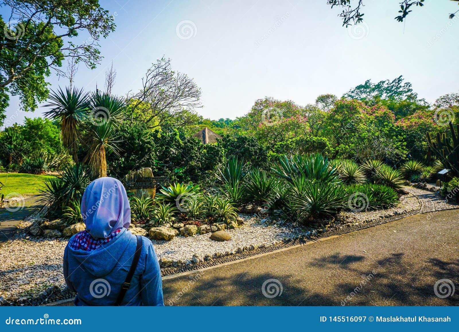 A menina no véu vê um parque bonito do jardim do cacto no lado da estrada - foto