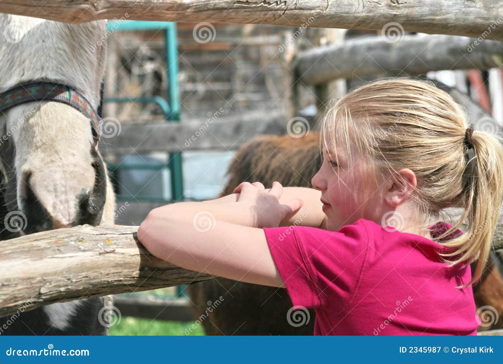 Menina que olha cavalos