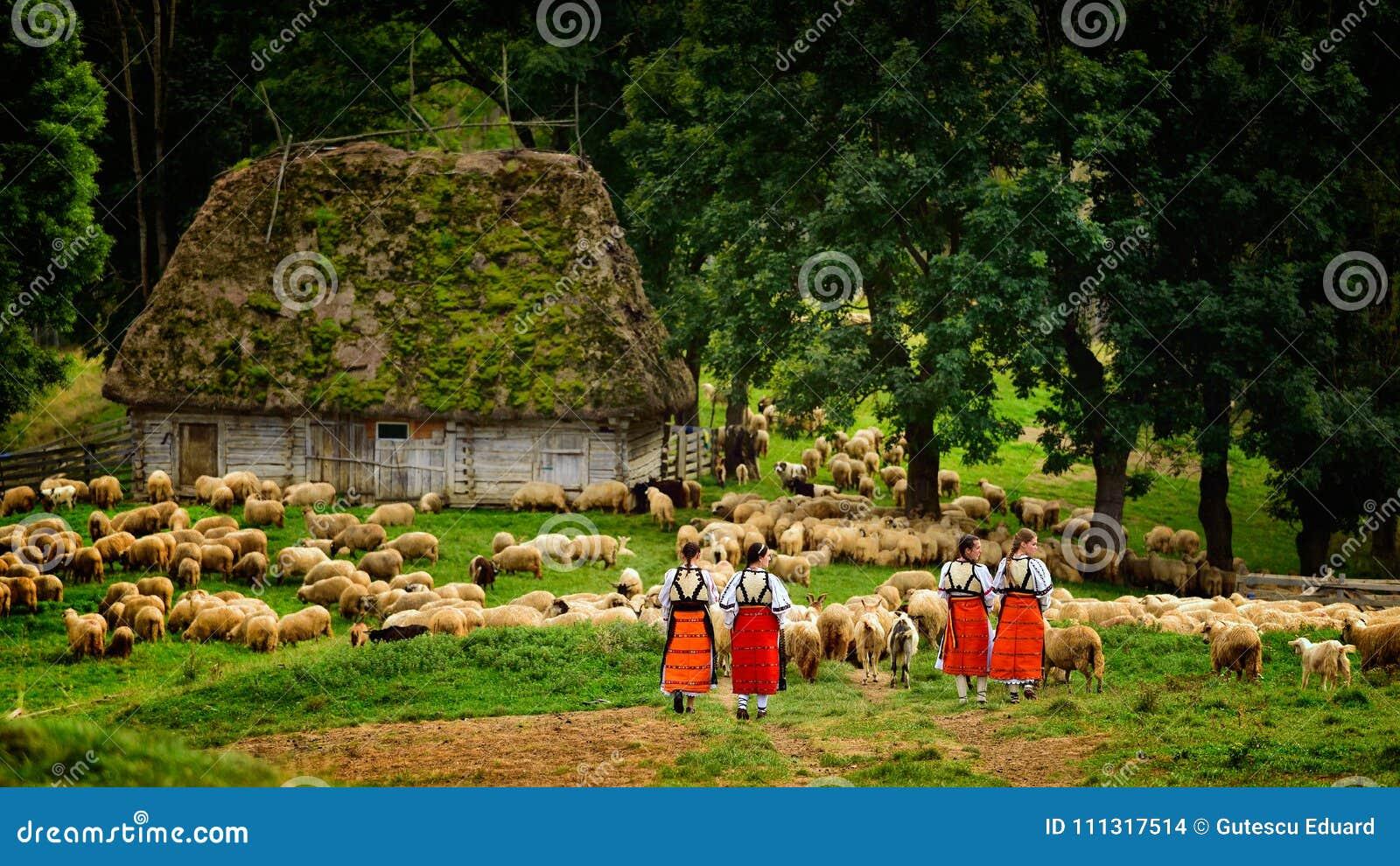 Meninas romenas novas na montanha com casa e carneiros do pastor