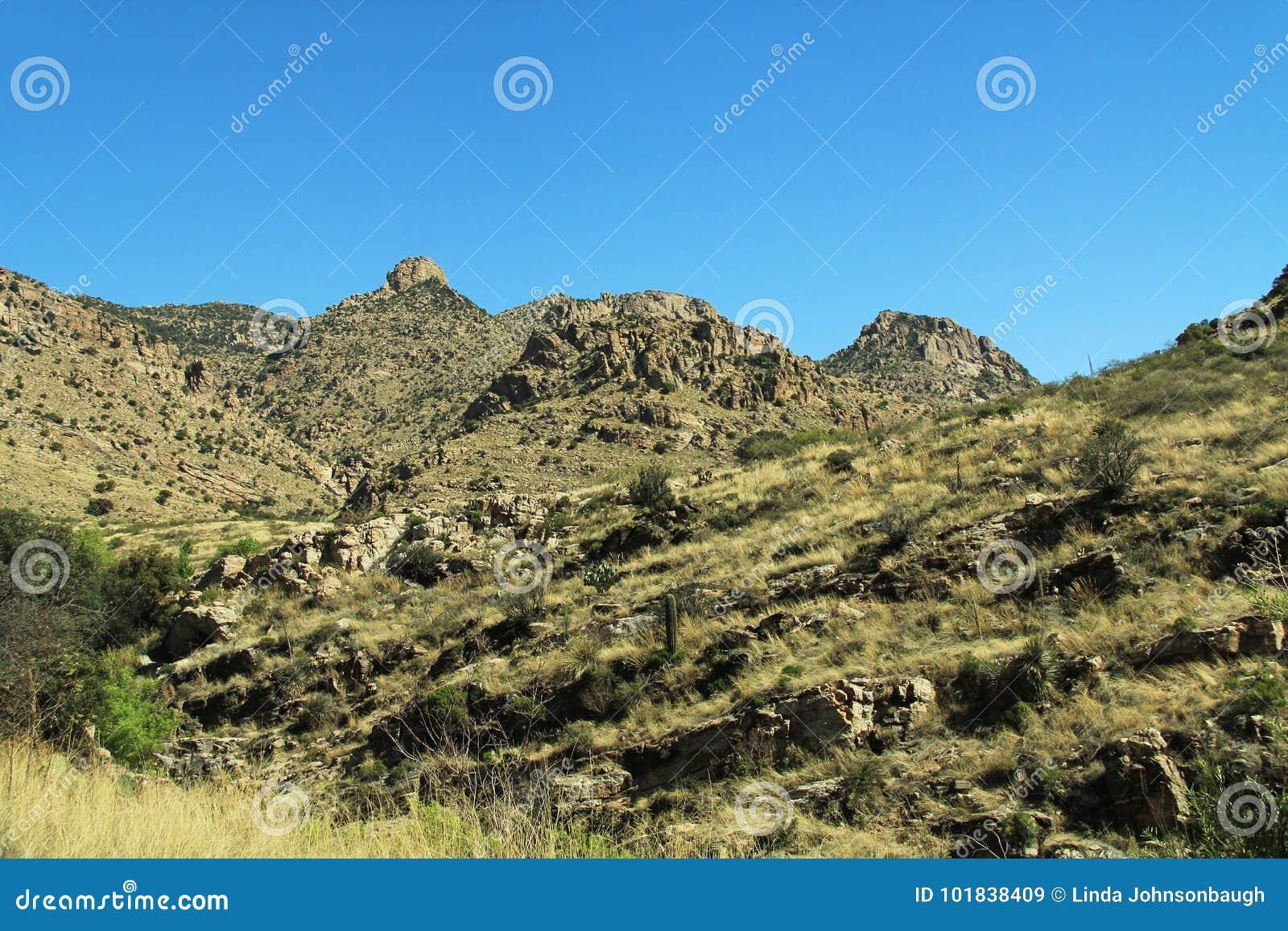 Mening het opdrijven zet Lemmon in Tucson Arizona op
