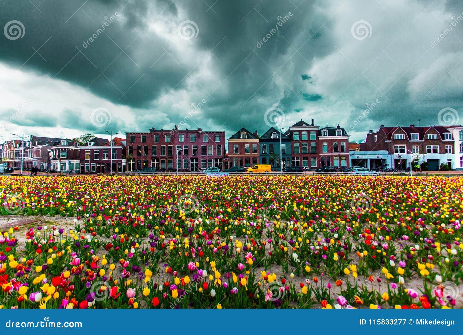 Mening over de mooie gebouwenvoorgevels op het centrale vierkant in de stad van Delft, Netherland