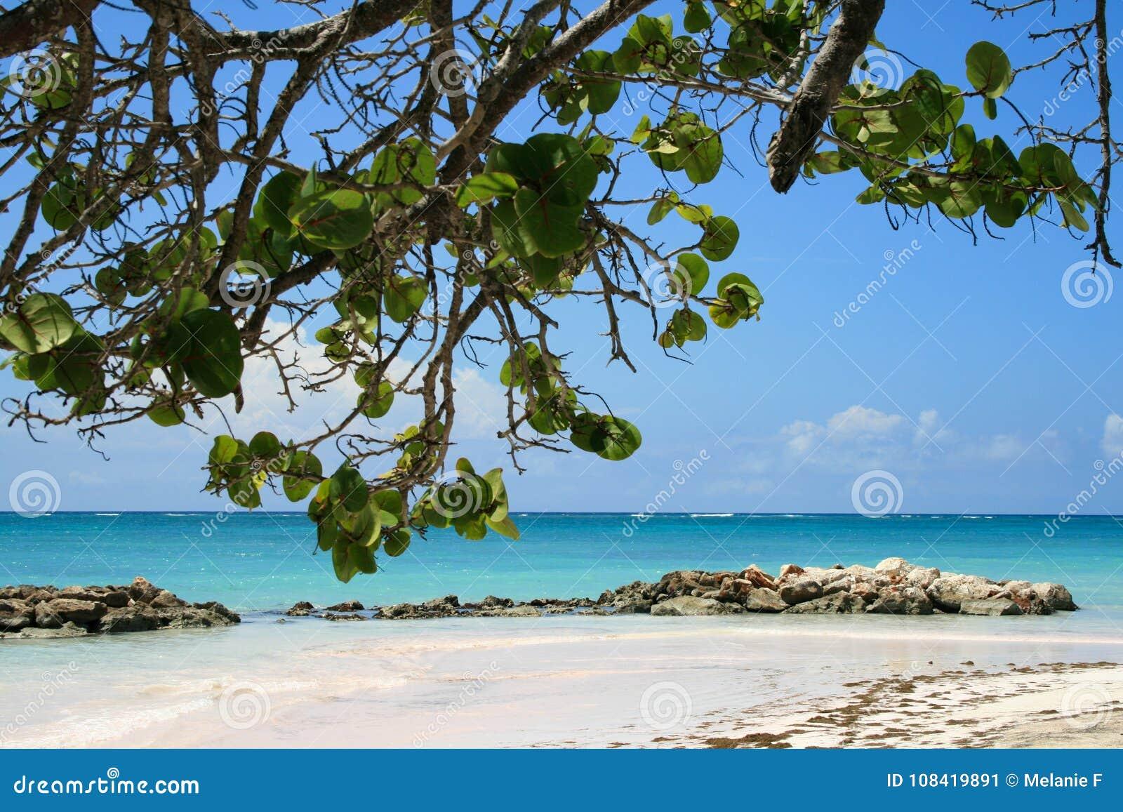 Mening van Caraïbisch Strand in Dominicaanse Republiek