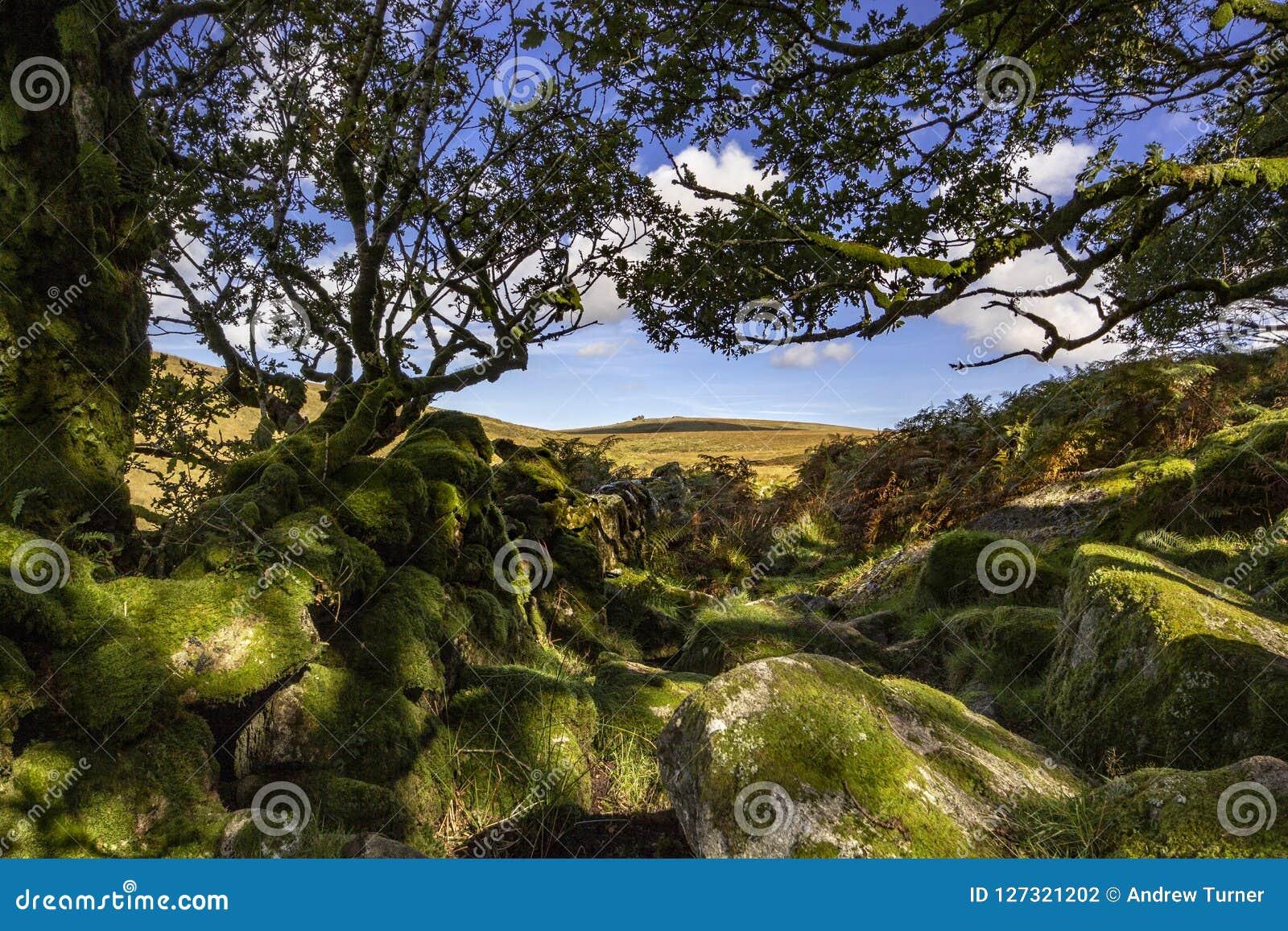 Mening van Dartmoor van Wistmans-Hout