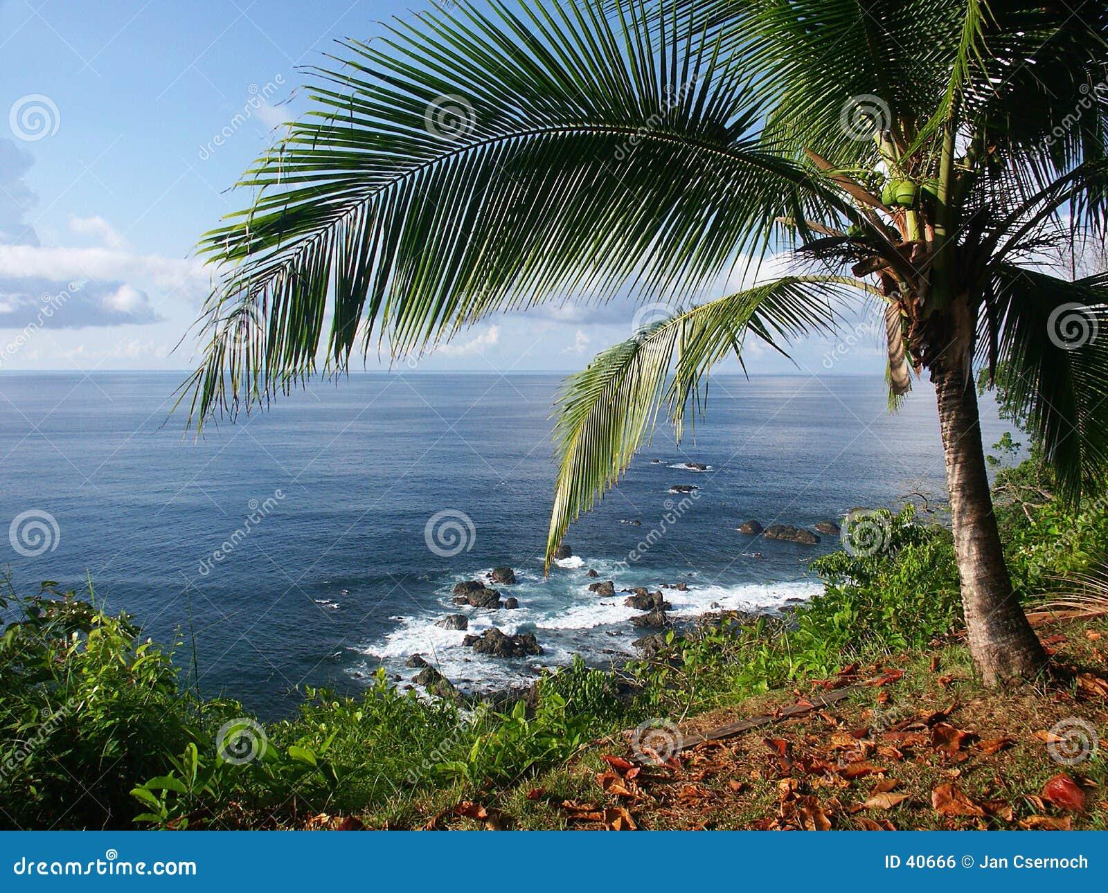 Mening van de oceaan met palmtree